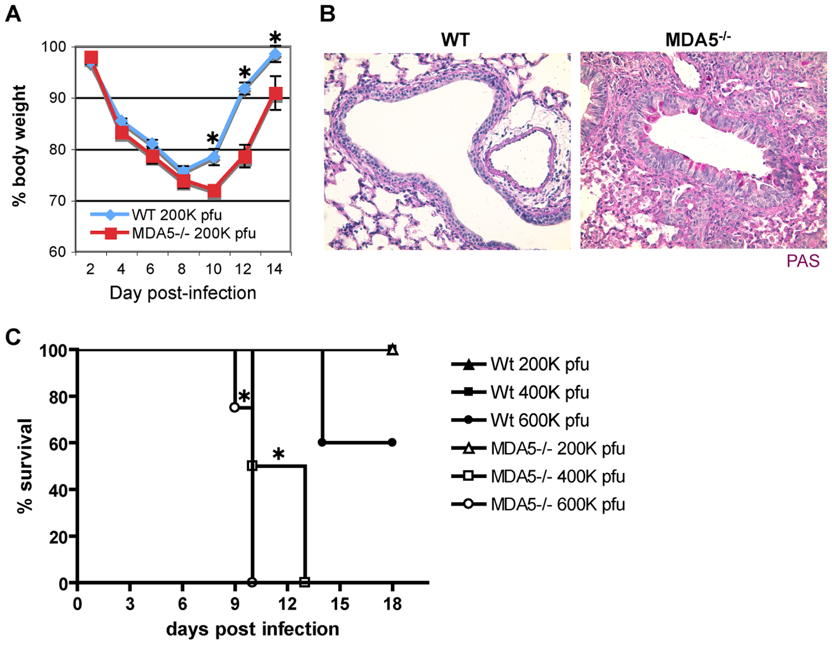 Infection with SeV causes increased morbidity and mortality in MDA5<sup>−/−</sup> mice.
