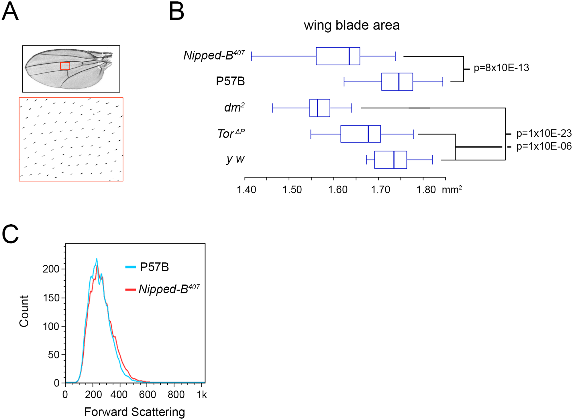 <i>Nipped-B</i>, <i>dm</i>, and <i>Tor</i> mutations reduce adult wing size.