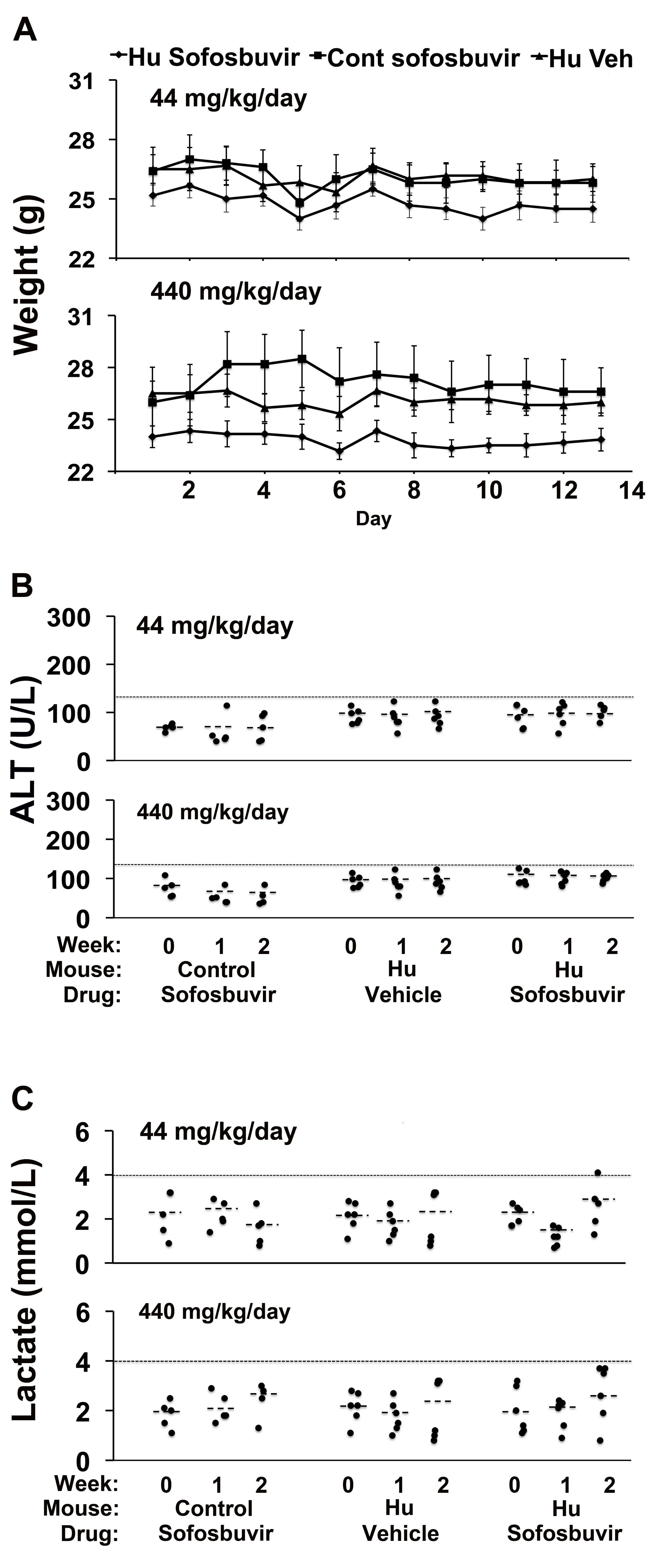 Sofosbuvir does not cause liver toxicity in TK-NOG mice with humanized livers.
