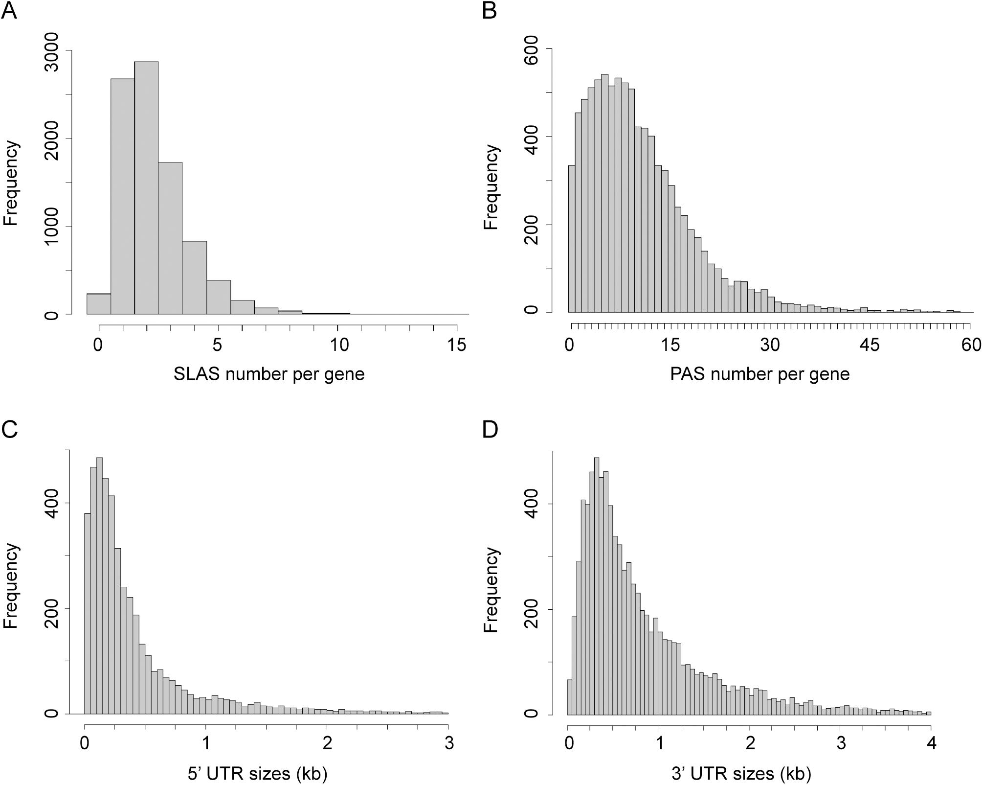 Distribution of SLAS, PAS and UTR lengths.