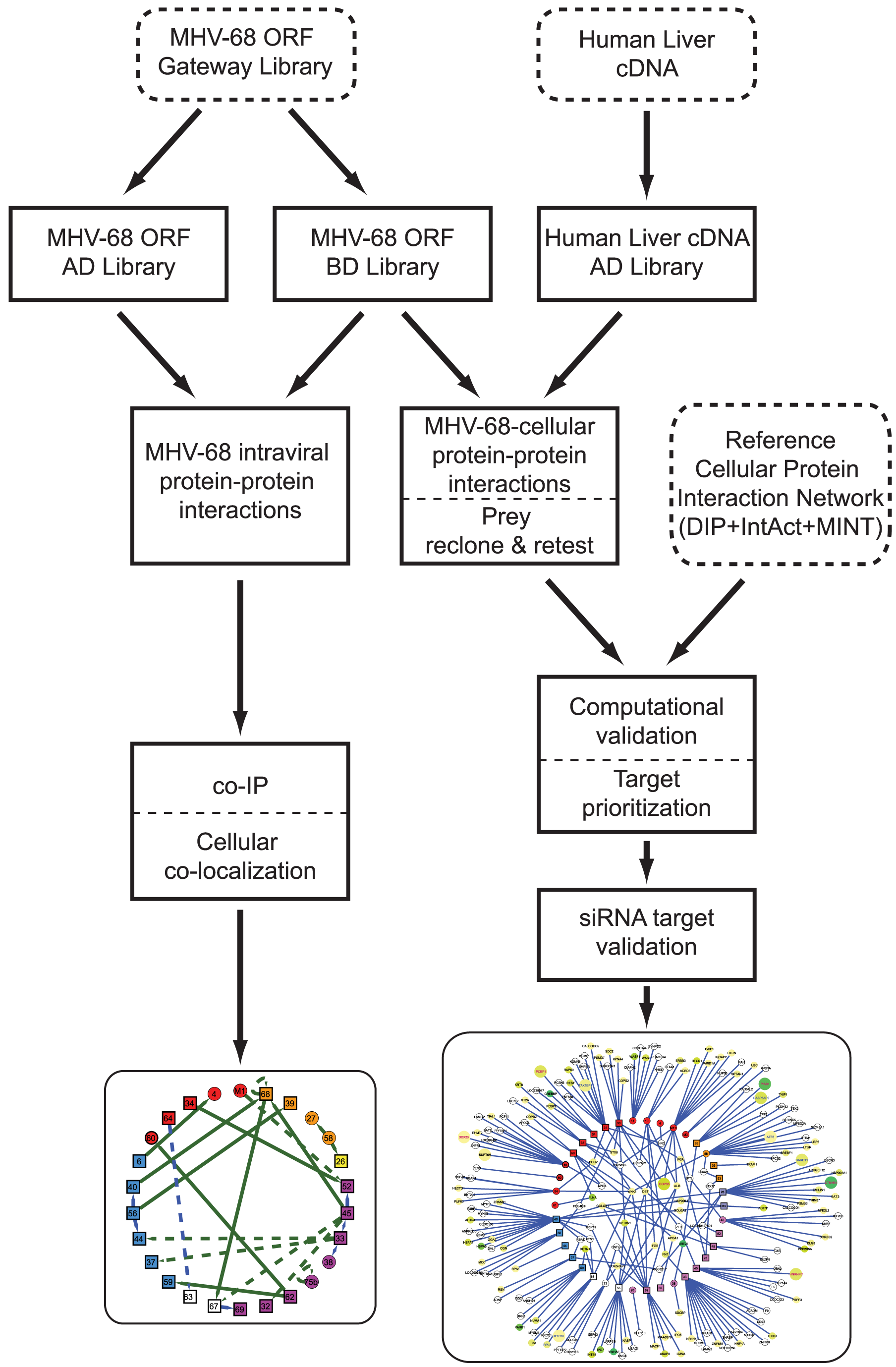 Overview of the generation and validation of the MHV-68 intra-viral and virus-cellular protein-protein interaction networks.