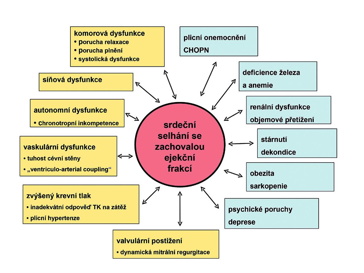 Srdeční selhání se zachovalou ejekční frakcí (HFPEF) má velmi komplexní patofyziologii a doprovází ho mnohočetné komorbidity