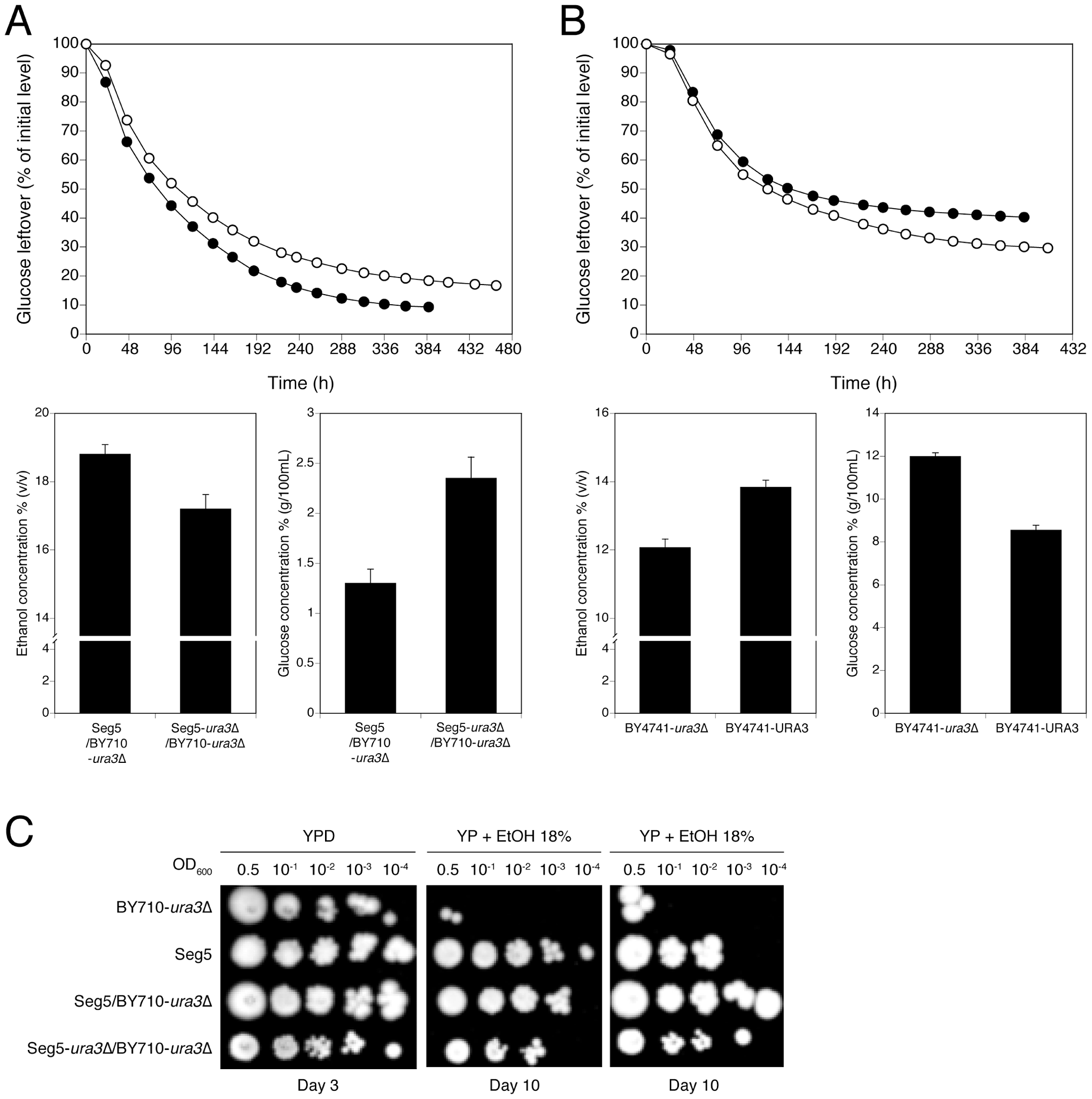 Loss of function assessment and complementation assay with the causative gene <i>URA3</i> in QTL3.