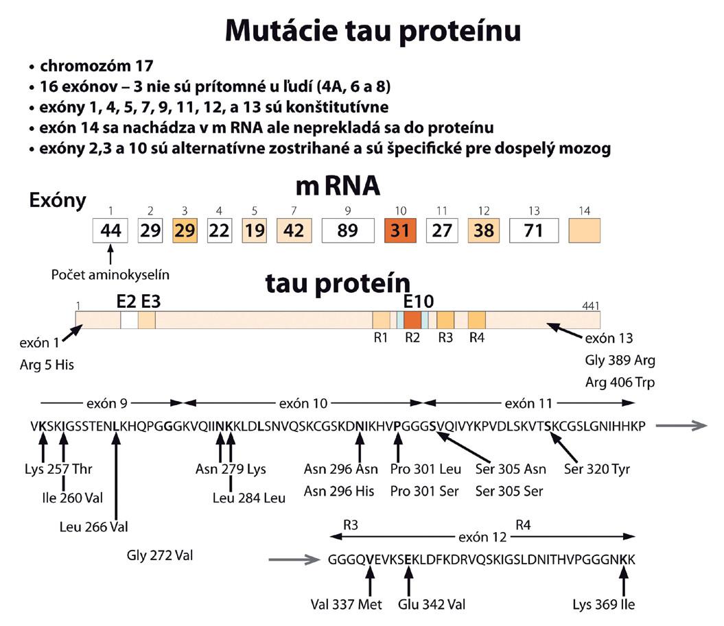 Mutácie tau proteínu (podľa [39]).