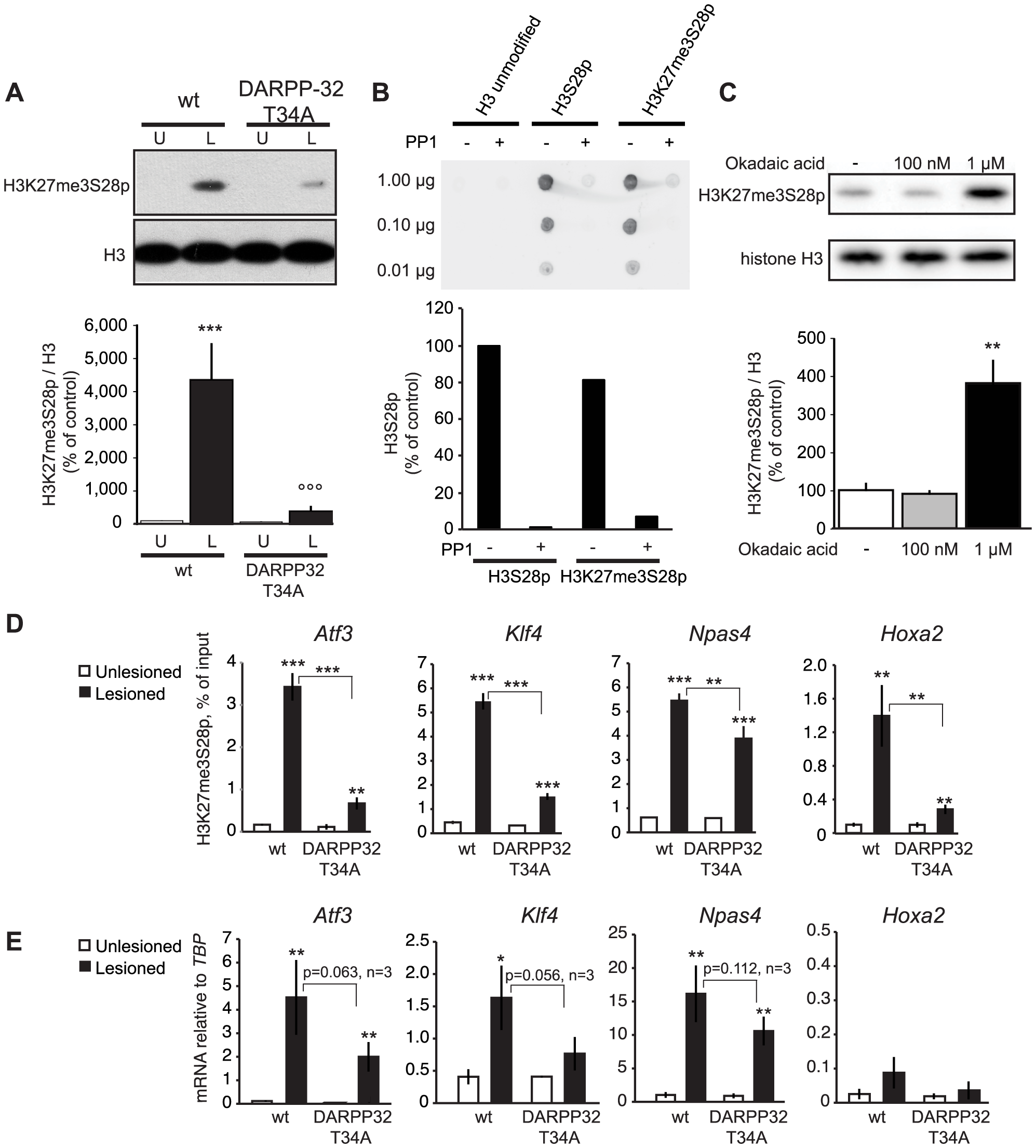 L-DOPA induced H3K27me3S28 phosphorylation and gene activation are dependent on a functional PP1 interaction site on DARPP-32.