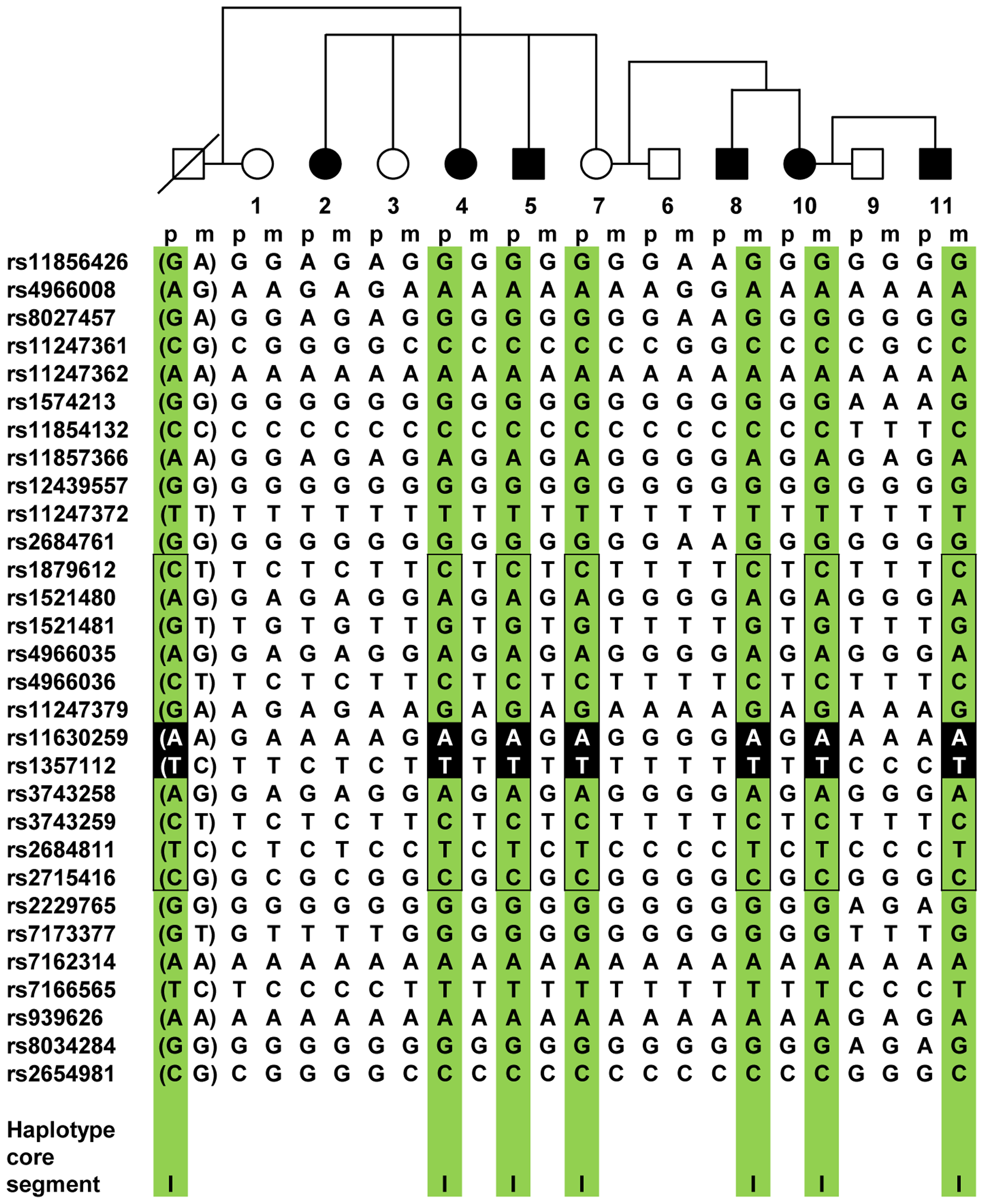 <i>IGF1R</i> haplotype segregation in family 70.