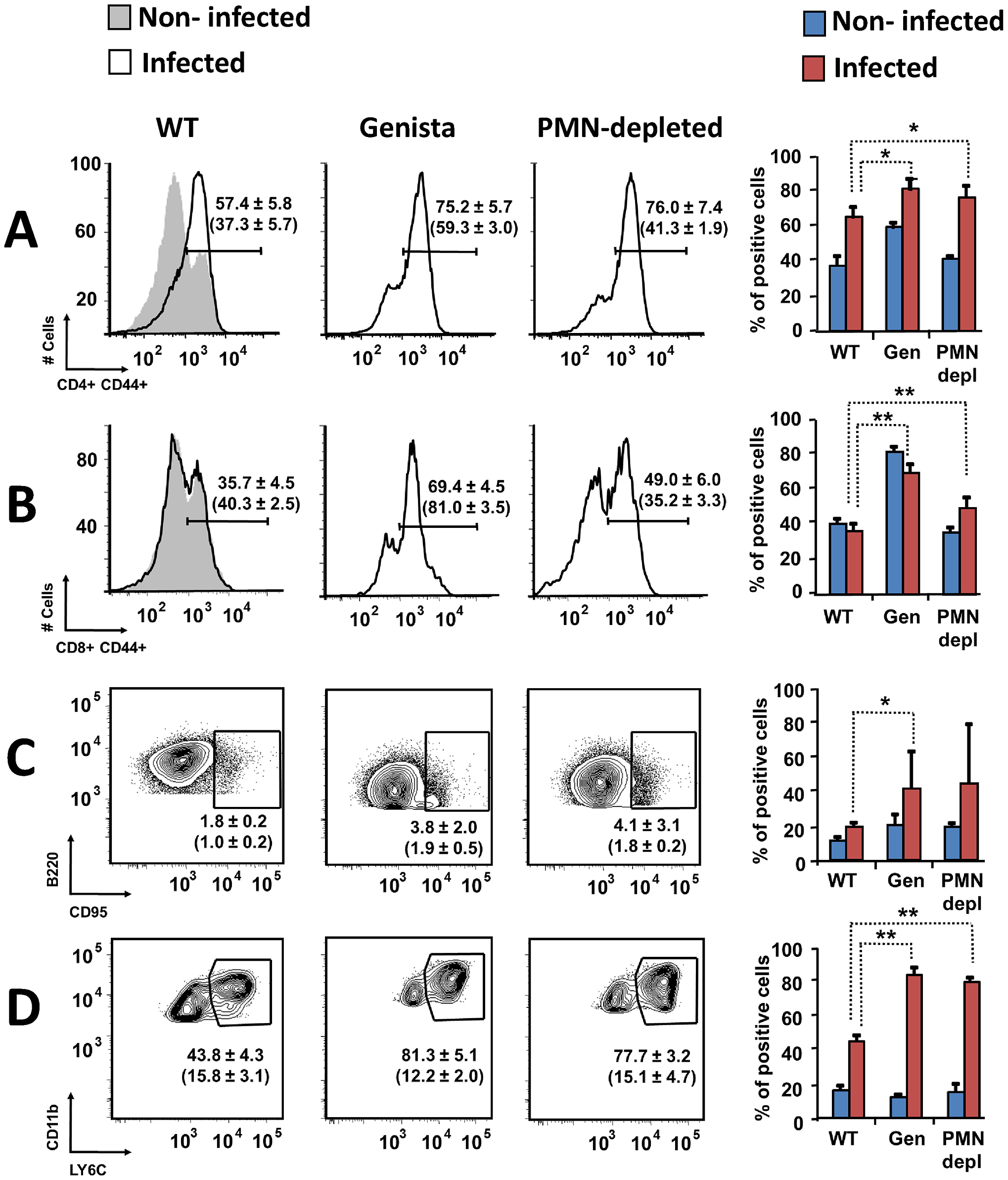 Activation of T and B lymphocytes and recruitment of monocytes in WT and neutropenic mice (Genista and PMN-depleted) at 8 days post-infection.
