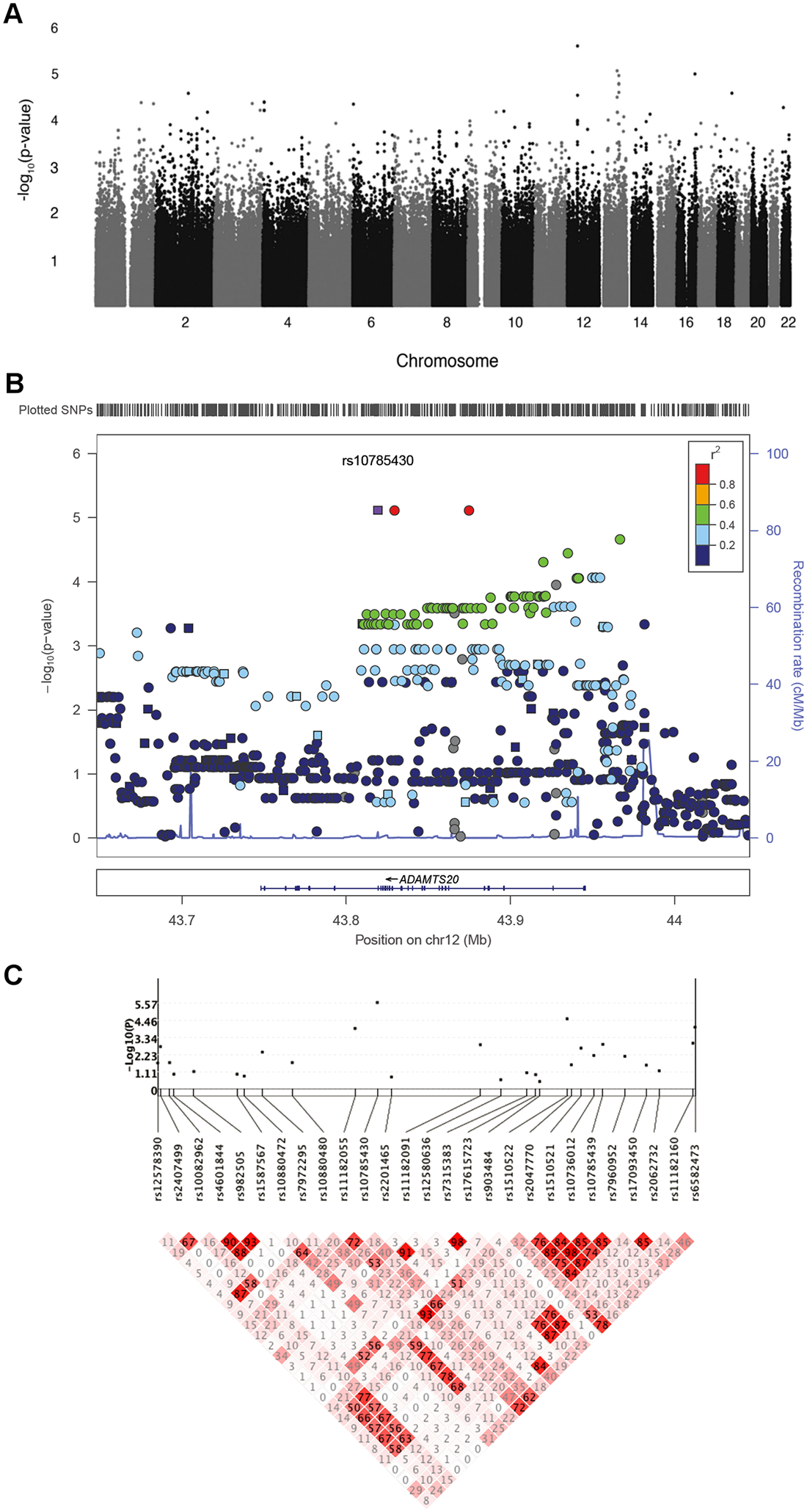 Genetic association results for CL/P in Guatemalans.