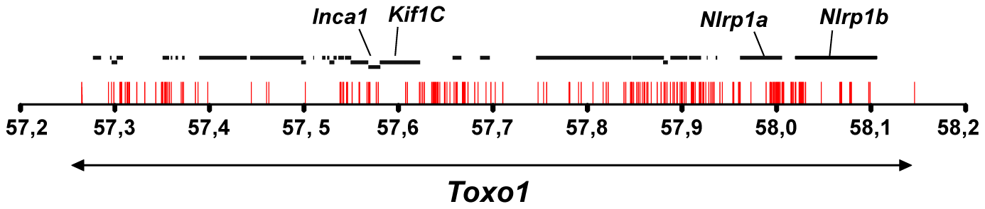Allelic variations in <i>Toxo1</i> correlating with toxoplasmosis resistance.