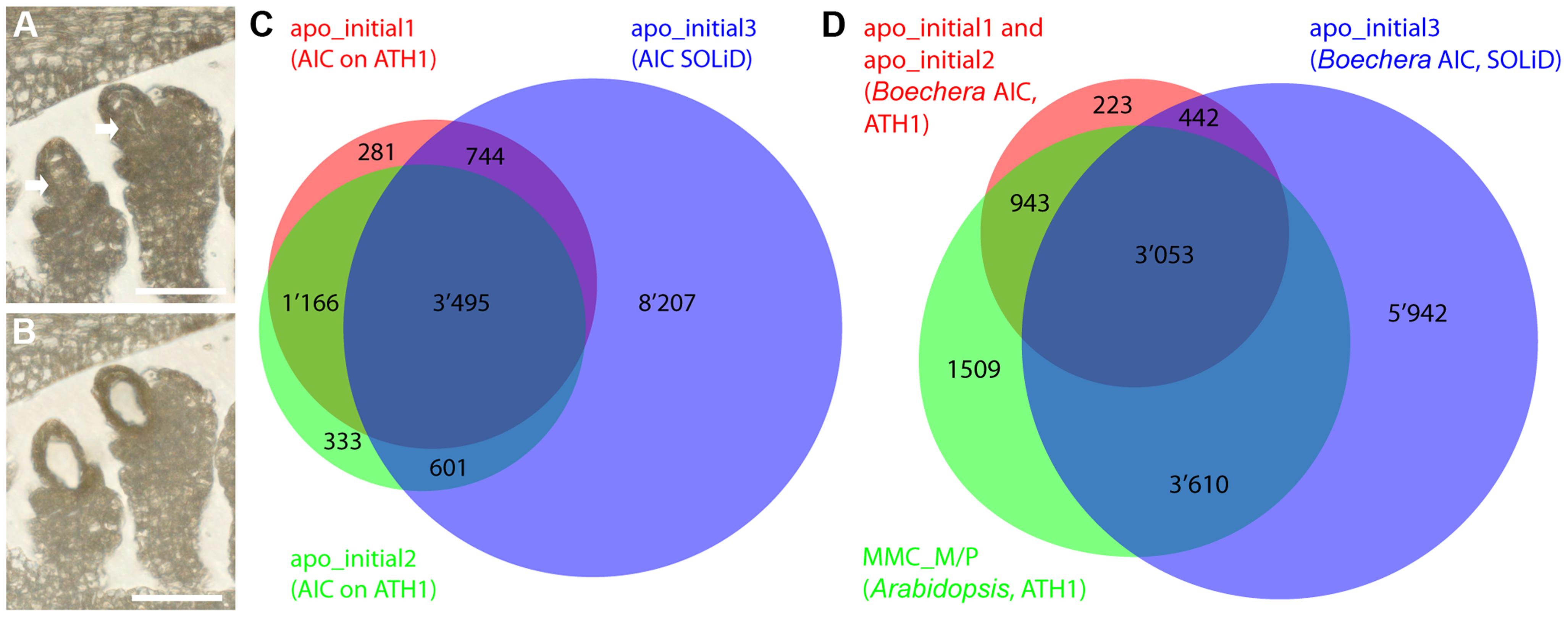 Laser-assisted microdissection (LAM) and transcriptome analysis to study the <i>Boechera</i> apomictic initial cell (AIC).