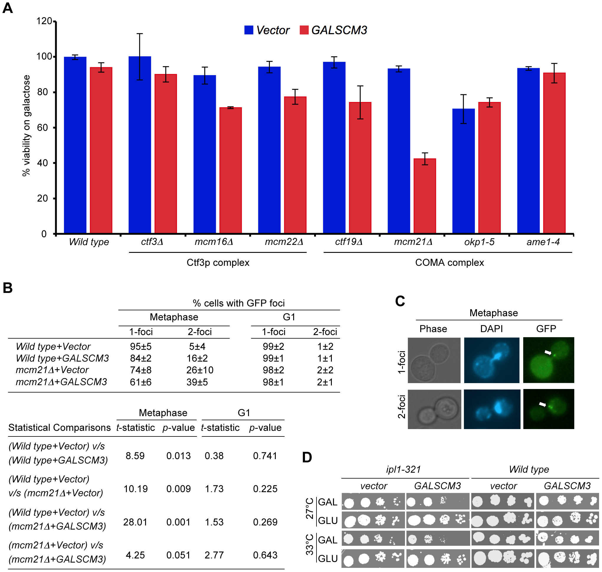 Overexpression of <i>SCM3</i> causes reduced viability in a subset of kinetochore mutants and premature separation of sister chromatids.