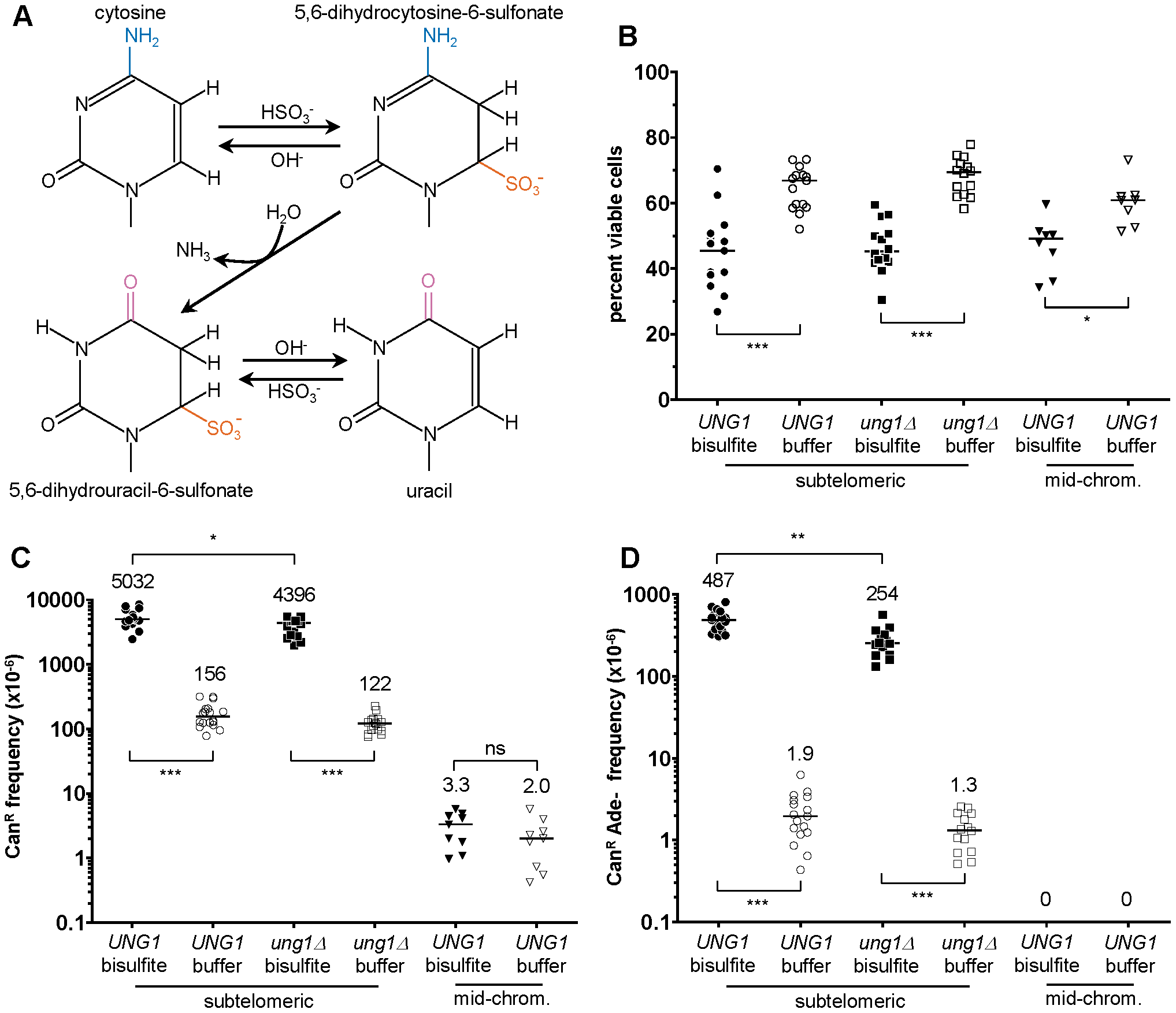 1% sodium bisulfite is a strong ssDNA–specific mutagen in vivo.