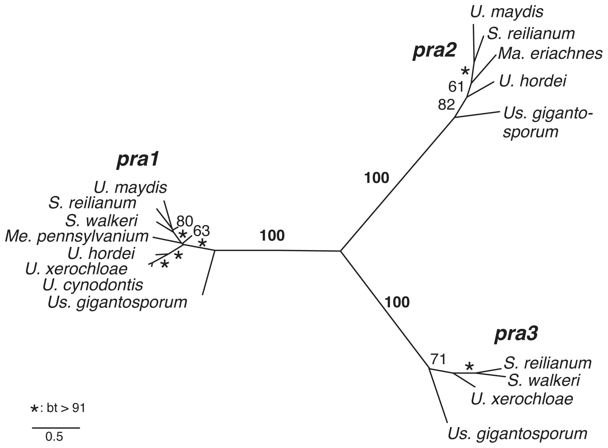 Phylogeny of mating type-specific pheromone receptors.
