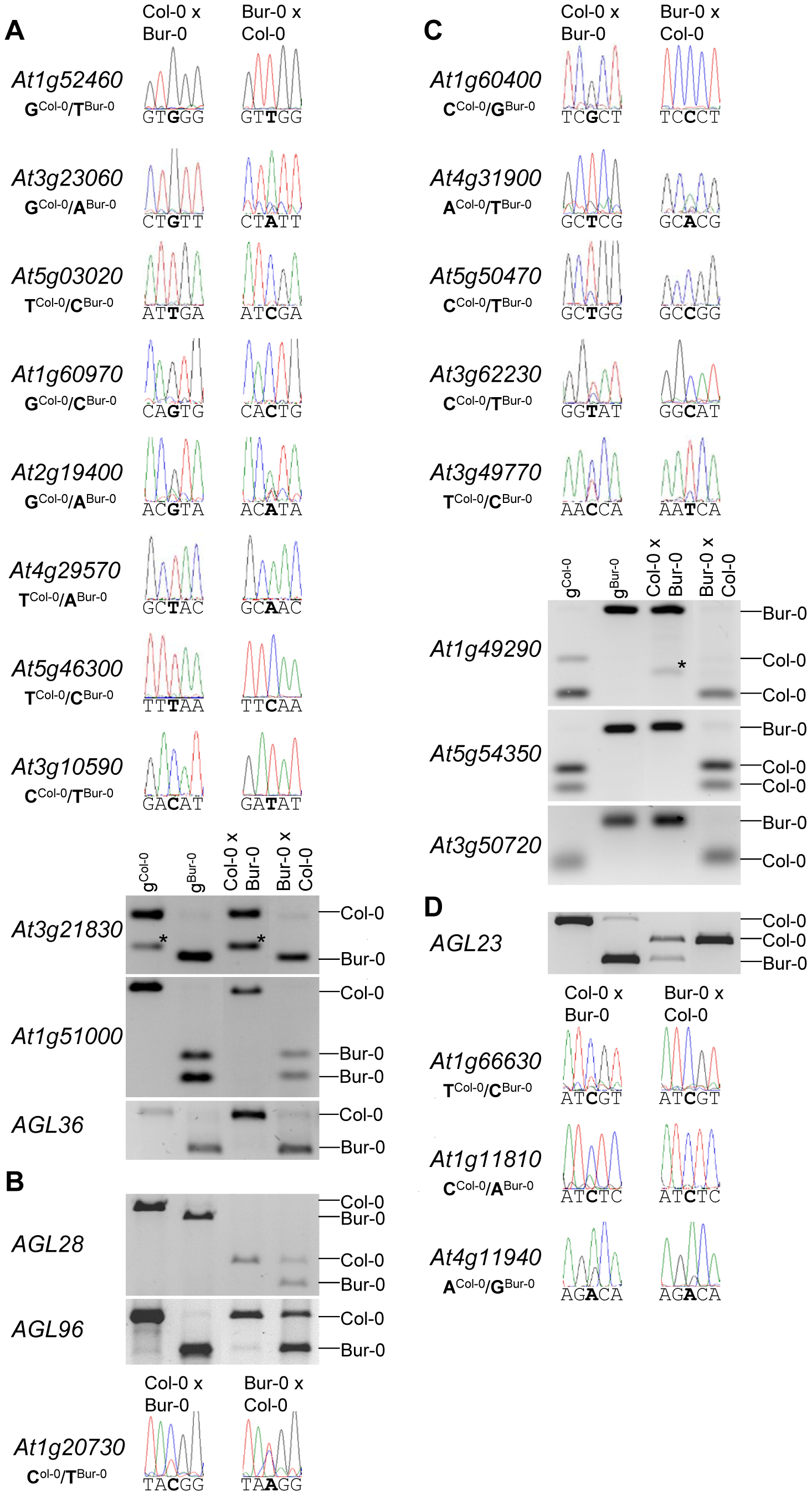 Allele-Specific Expression Analysis of MEGs and PEGs.