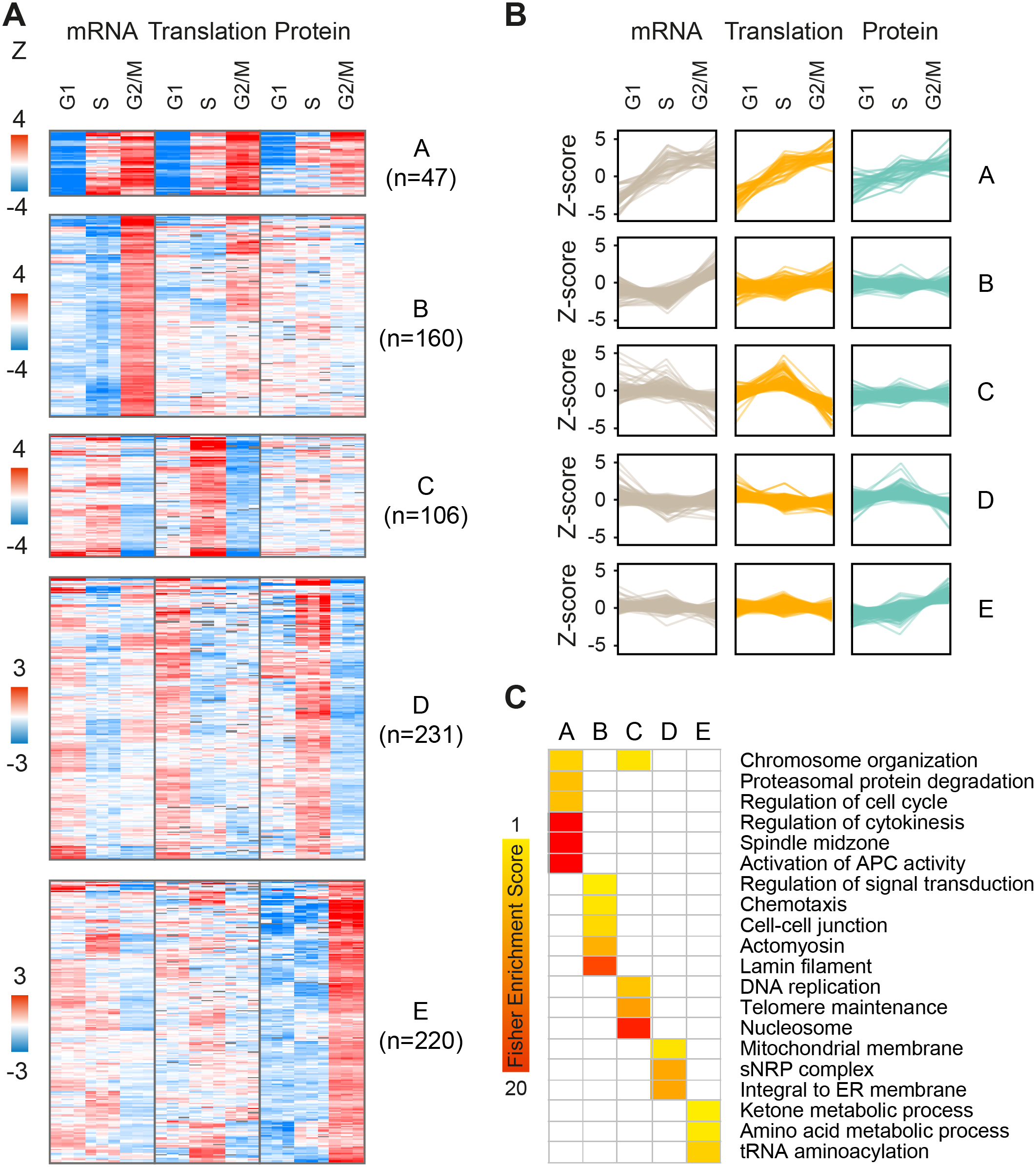 Clustering of periodic gene products.