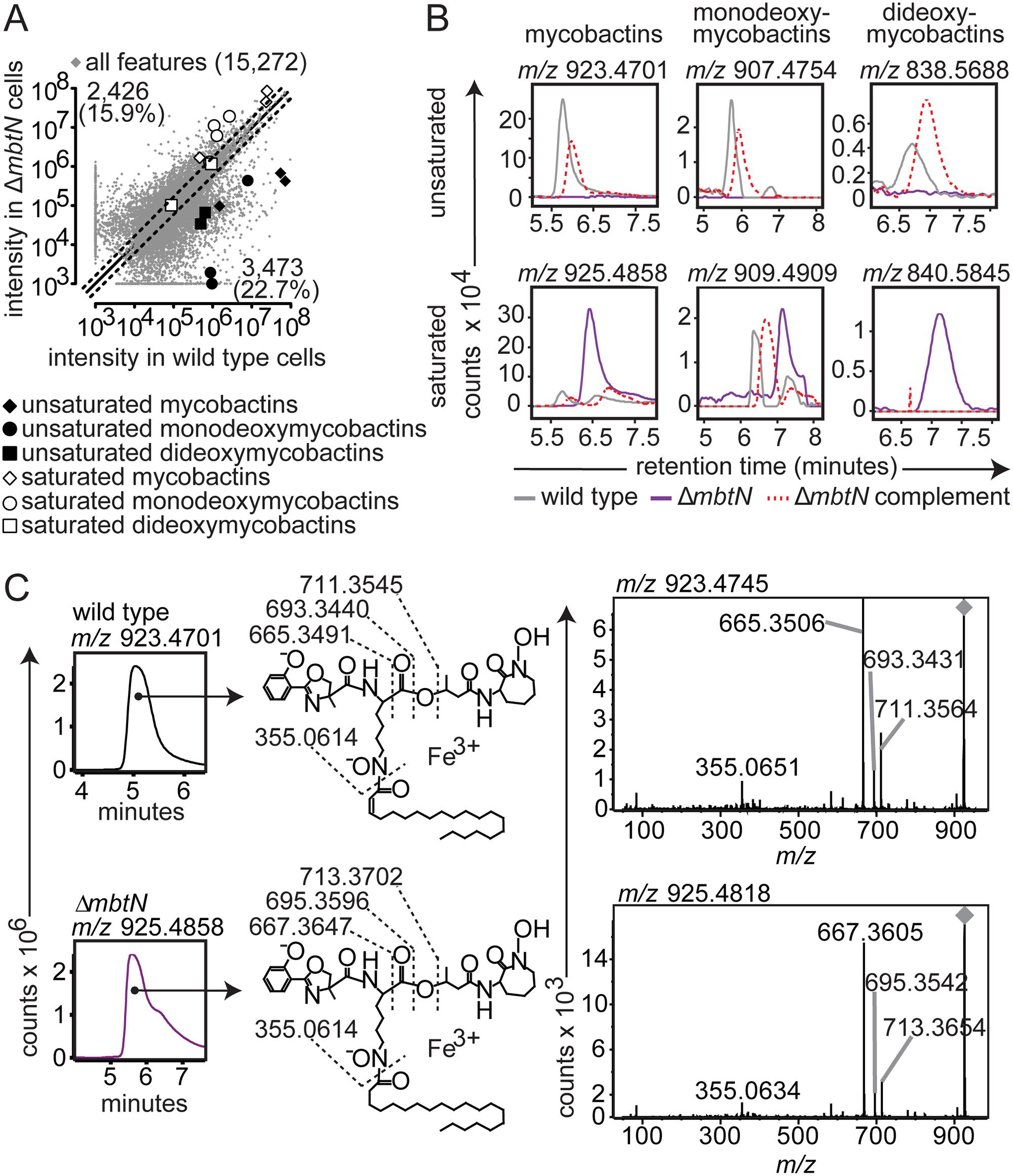 Δ<i>mbtN</i> lacks unsaturated mycobactin.