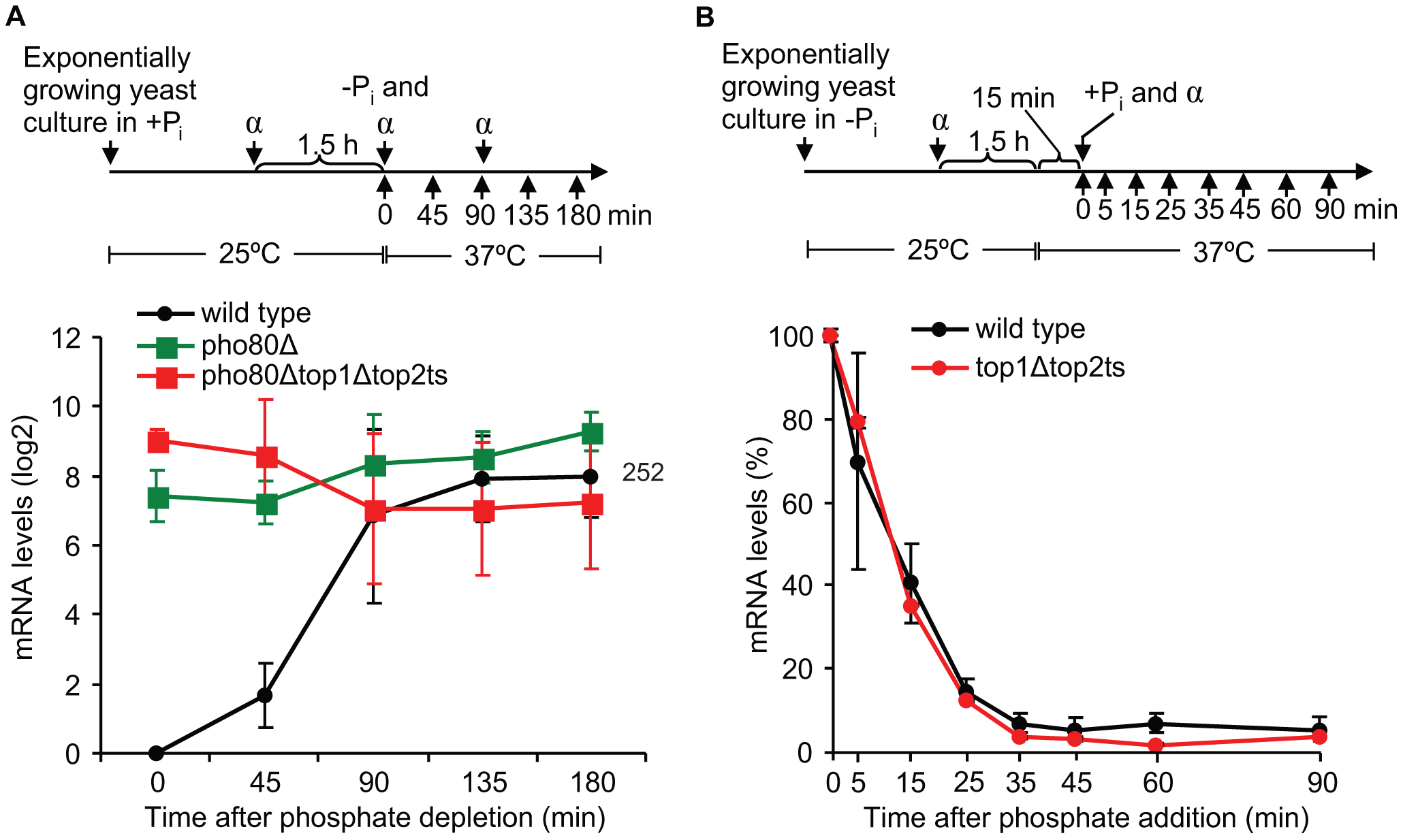 Topoisomerases are dispensable for transcription once the <i>PHO5</i> promoter is activated, and they are not required during <i>PHO5</i> inactivation.