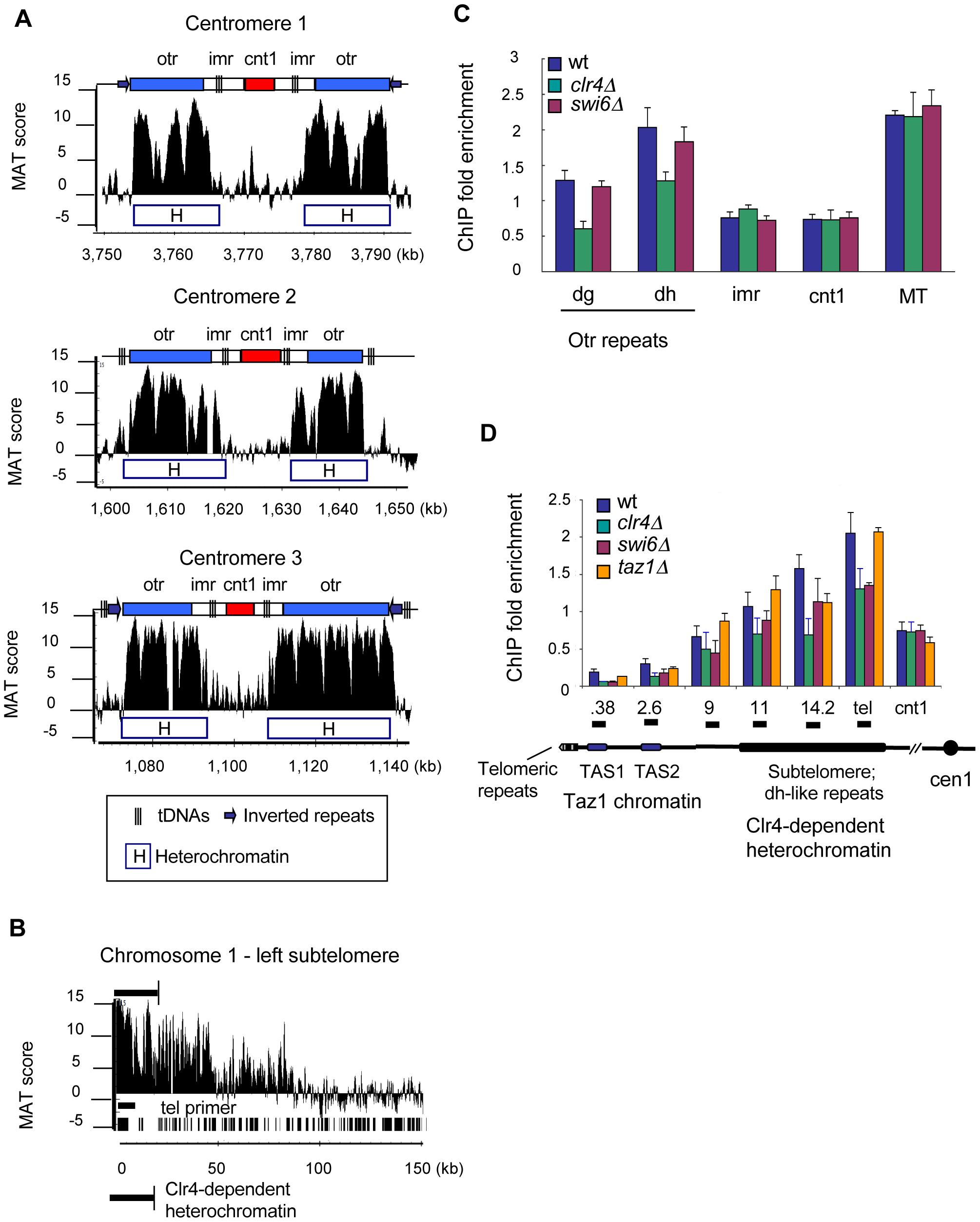 γH2A in the centromeres and telomeres is associated with Clr4-dependent heterochromatin.