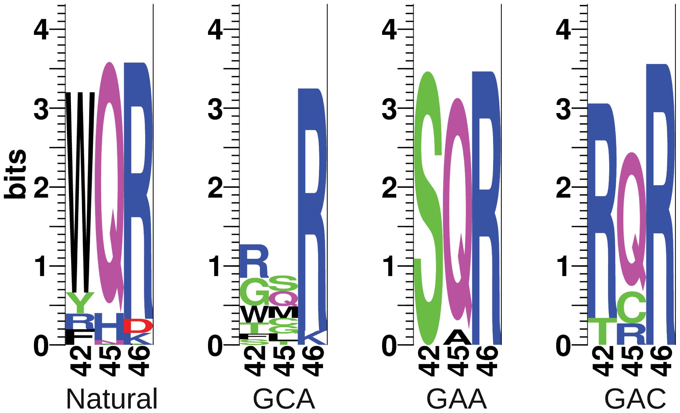 Sequence logos of natural and selected variants of the MarA binding domain.