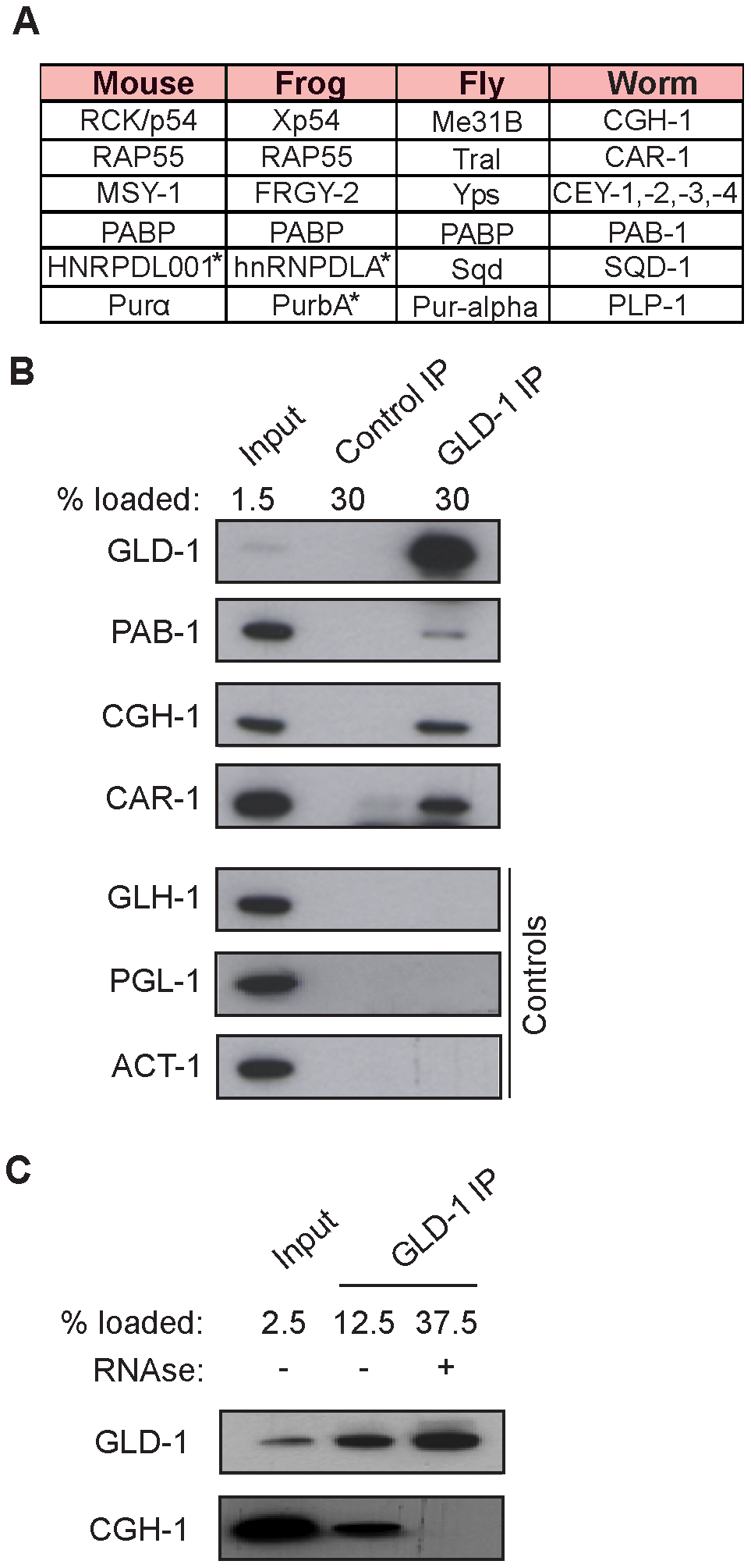 GLD-1 interacts with conserved components of RNA granules.