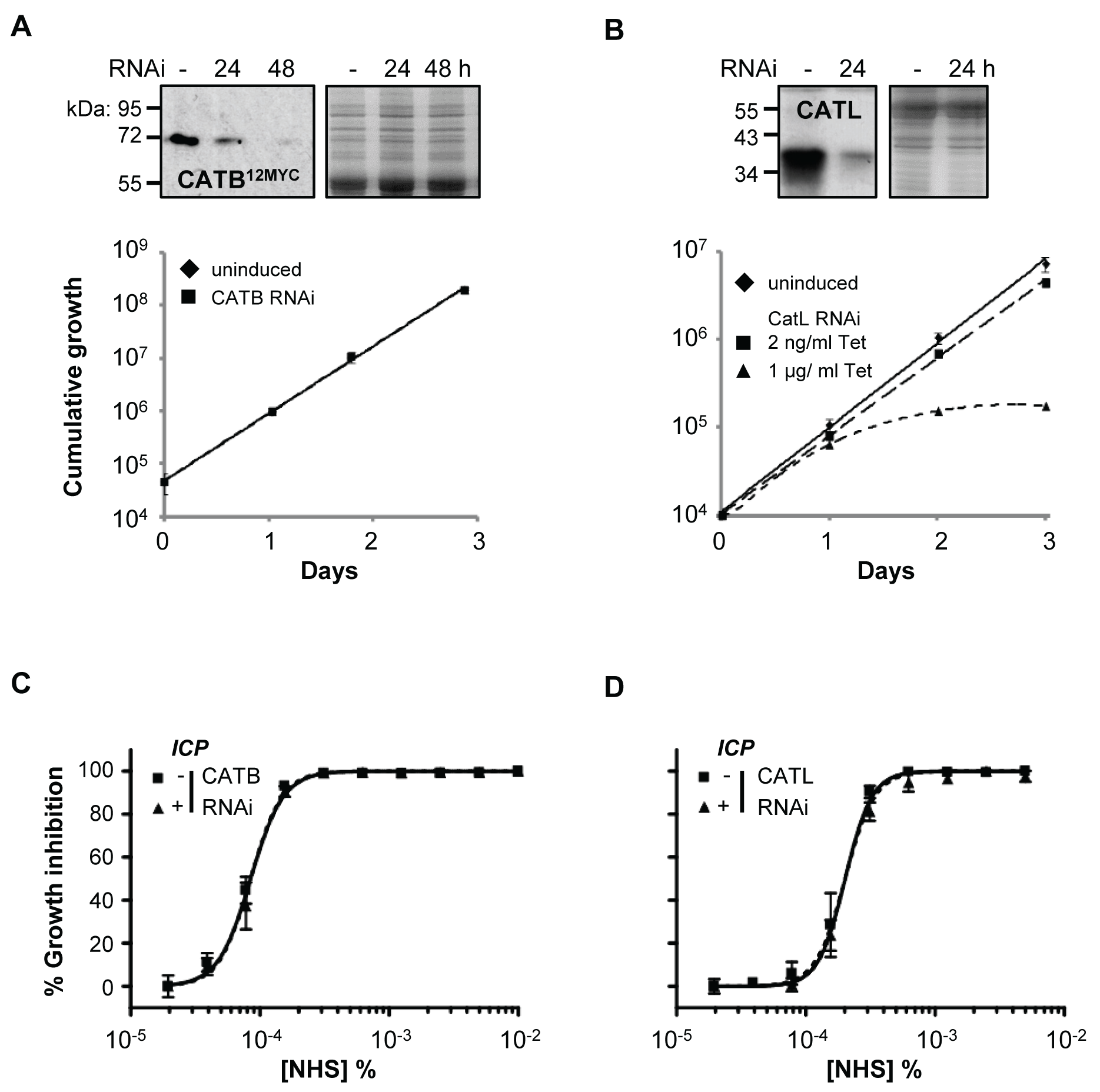 Specific depletion of <i>T. b. brucei</i> cathepsins in the presence of ICP has no effect on human serum trypanolytic activity.