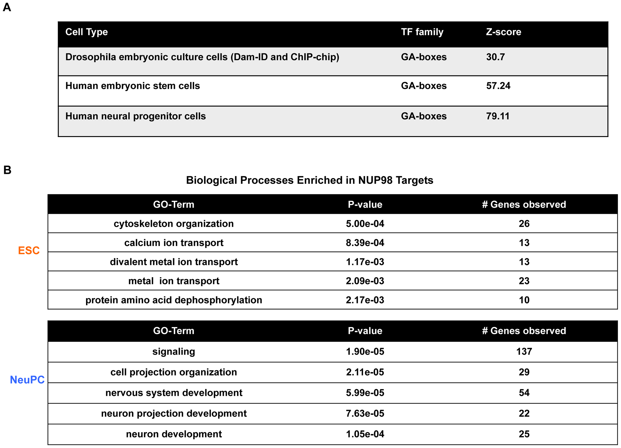 Transcription factor motif and gene ontology analysis of NUP98 binding regions.