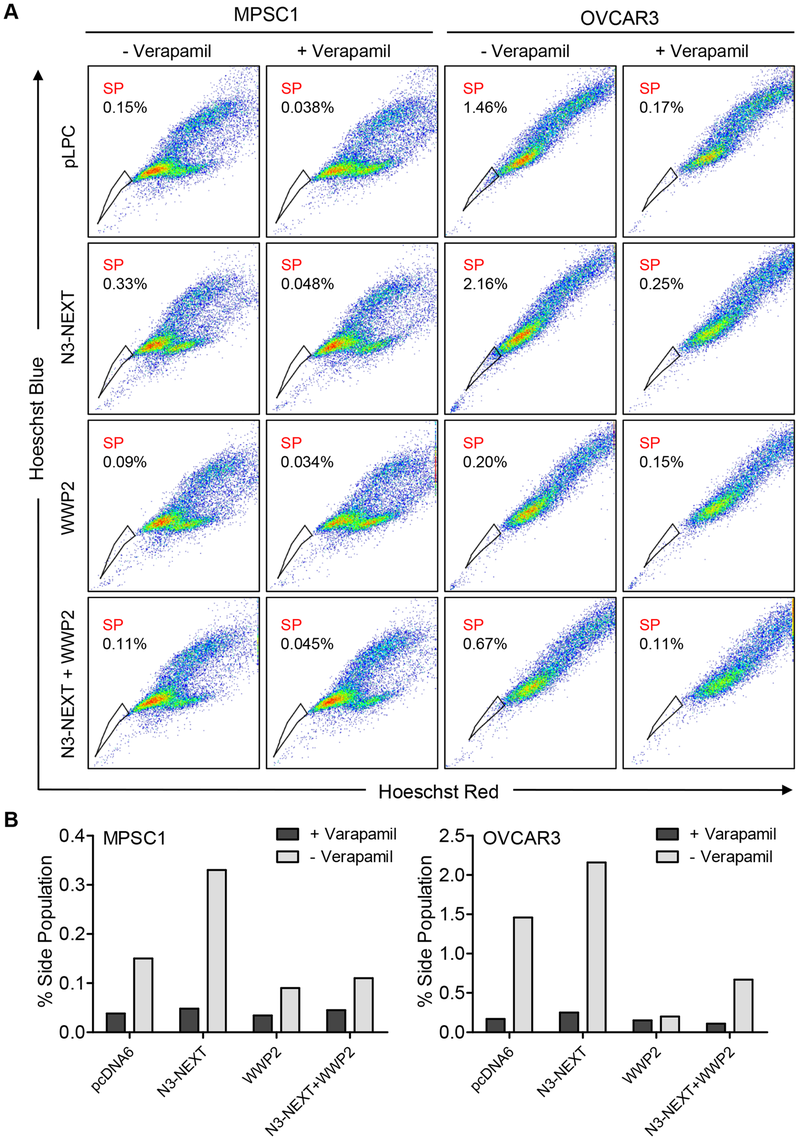 WWP2 counteracts Notch3-induced increase in CSC population.