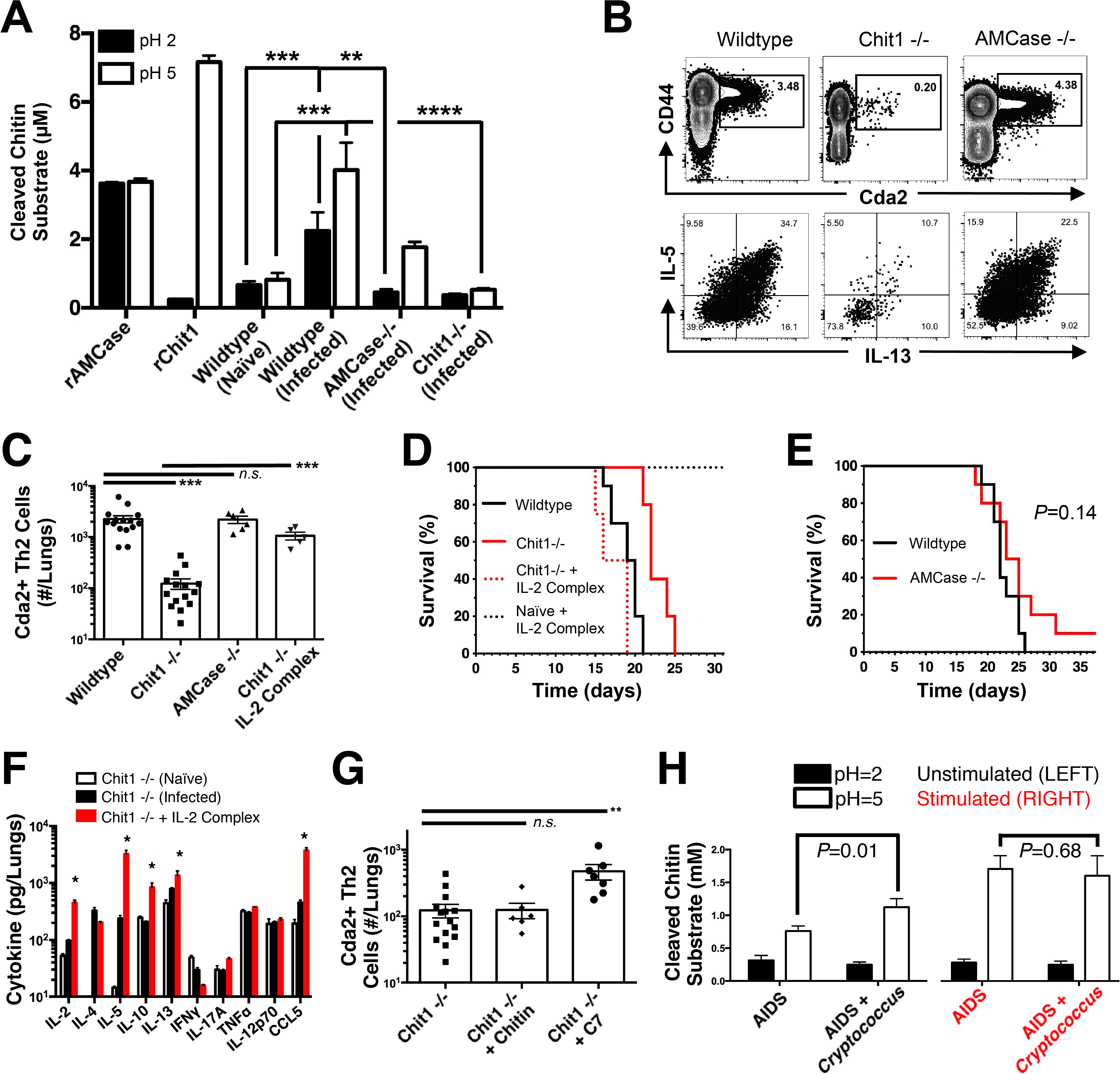 Chitotriosidase Promotes Chitin Recognition and Th2 Cell-mediated Disease.