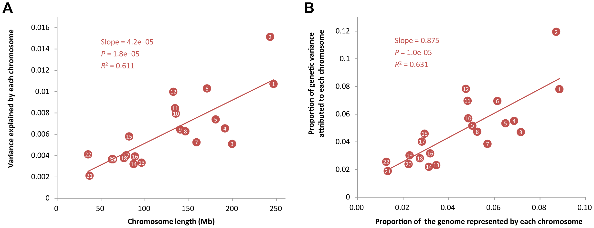 Proportion of variance attributed to each chromosome averaged across 47 traits against chromosome length.
