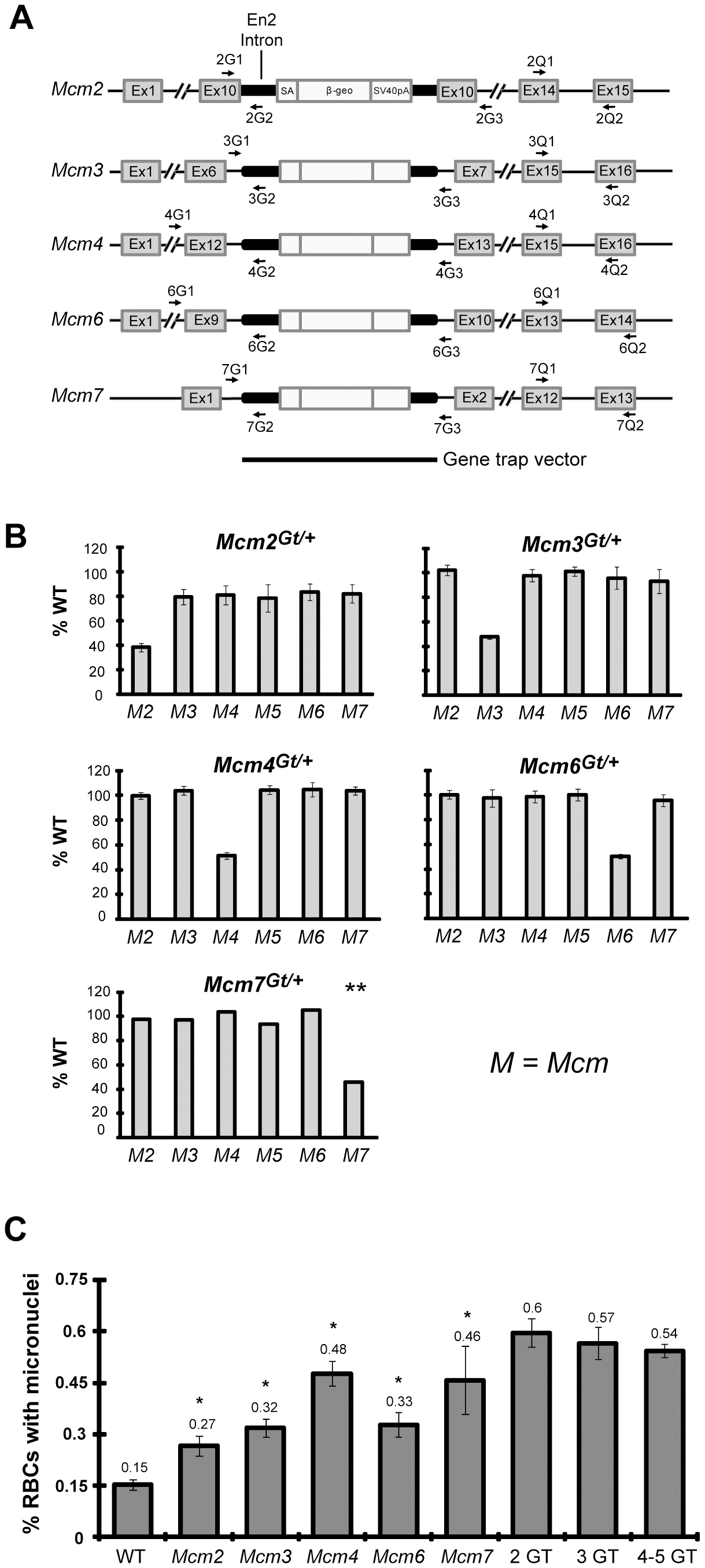 Mcm gene trap alleles and associated mRNA levels, peripheral blood micronuclei, and cancer frequency.