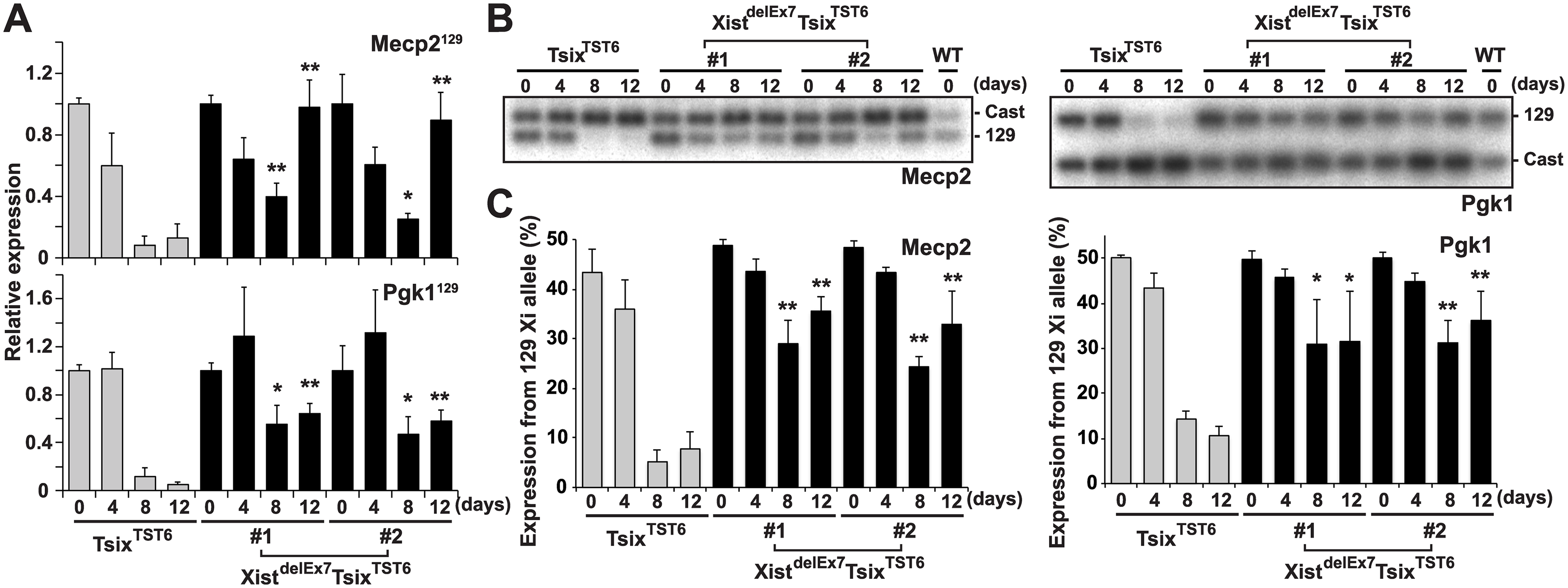 Truncation of exon 7 of Xist RNA affects the X-linked gene silencing on the Xi during EB differentiation.