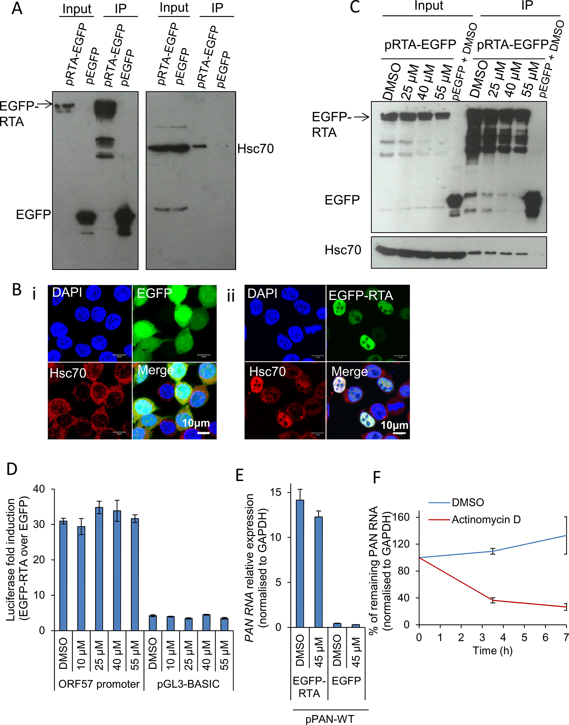 Hsp70 isoforms were not required for RTA-mediated transactivation of KSHV promoters.