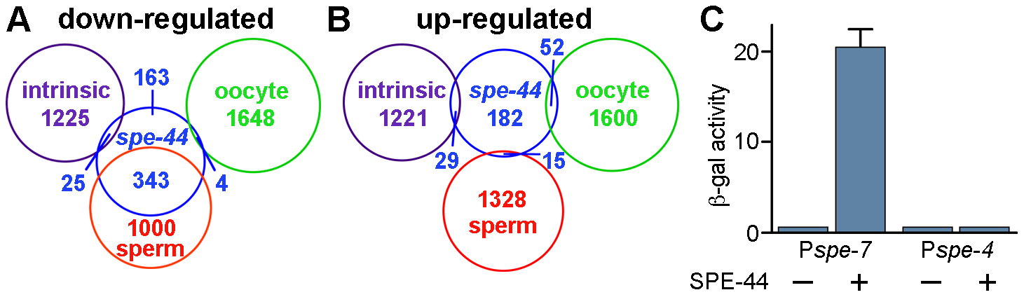 Summary of microarray results and transcriptional activation by SPE-44.