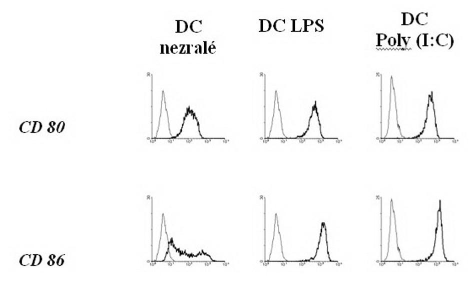Zvýšení exprese povrchových kostimulačních molekul na DC po stimulaci LPS a Poly (I:C) Fig. 3. Enhancement of the superficial co-stimulating molecules expression on DCs, following LPS and Poly (I:C) stimulation