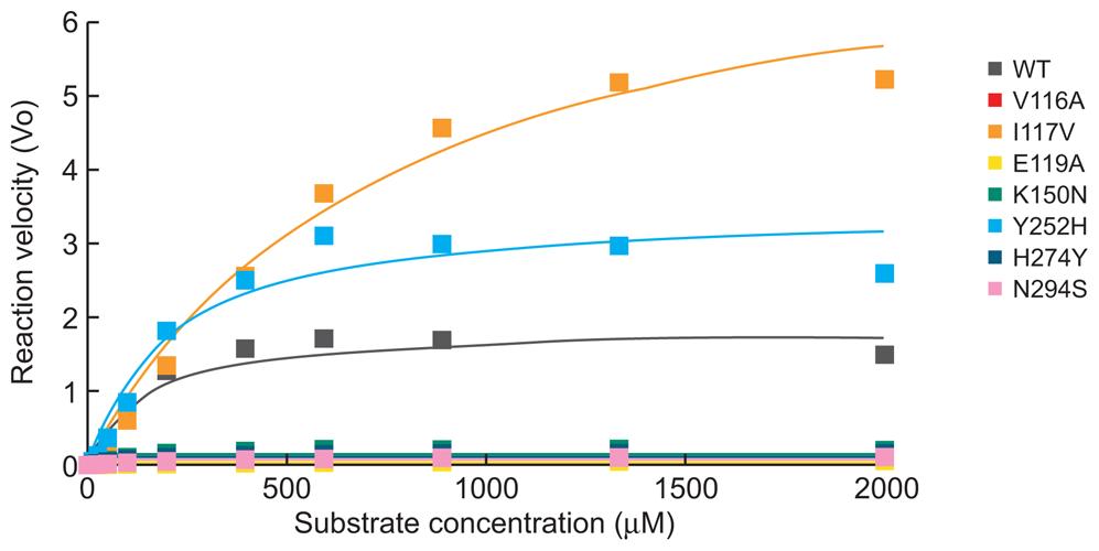 NA enzyme kinetics of the recombinant A/Turkey/15/06-like (H5N1) viruses.