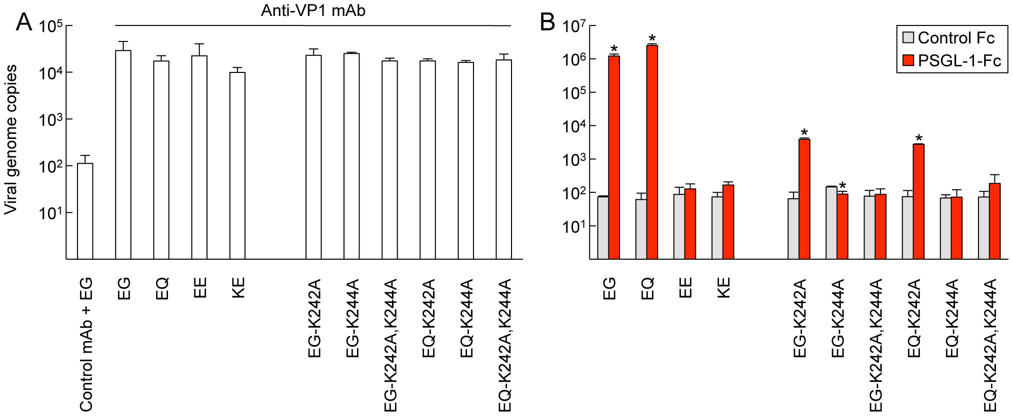 EV71–PSGL-1 binding assay using real-time RT-PCR.