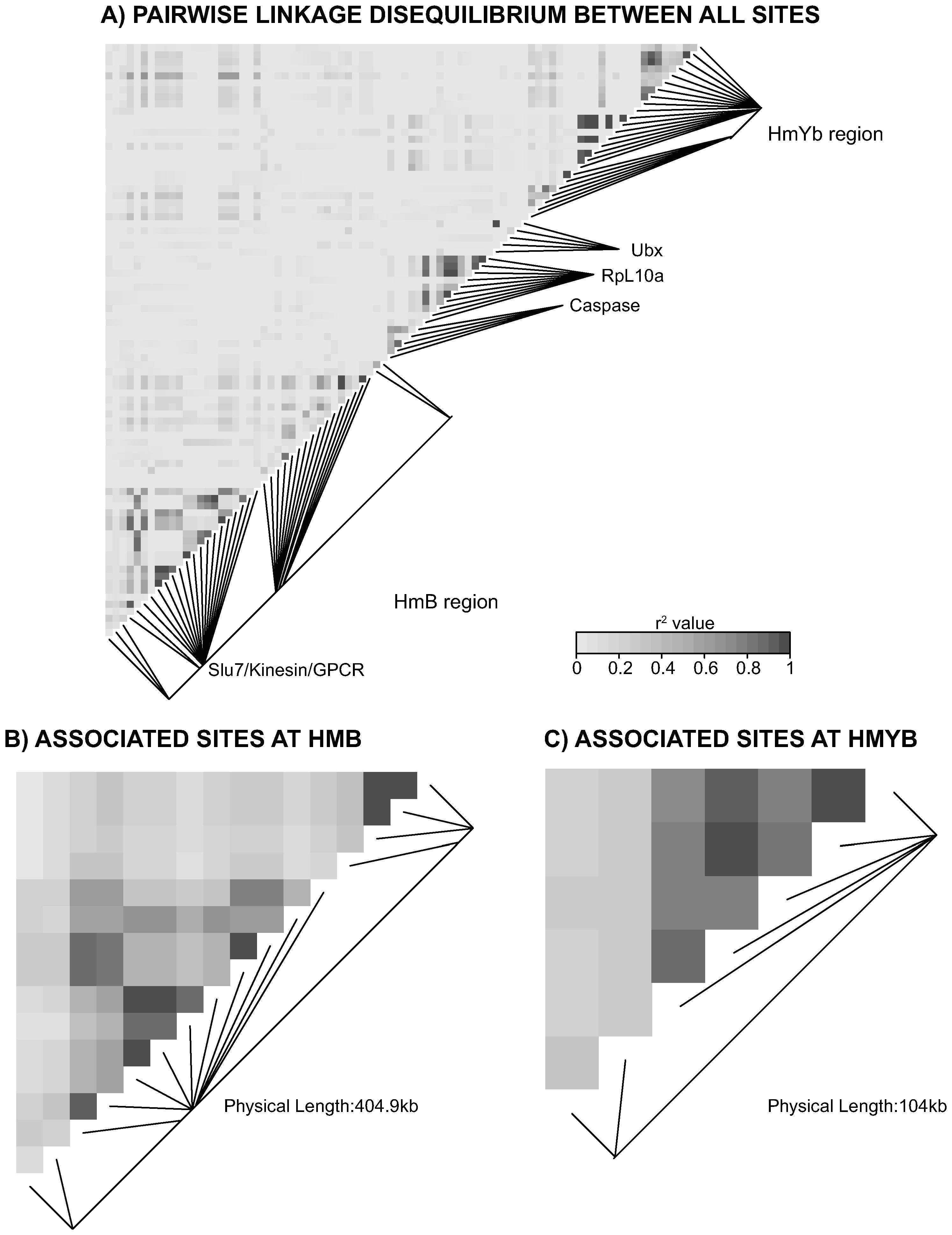 Linkage disequilibrium (LD) for combined <i>H. m. aglaope</i> and <i>H. m. amaryllis</i> populations.