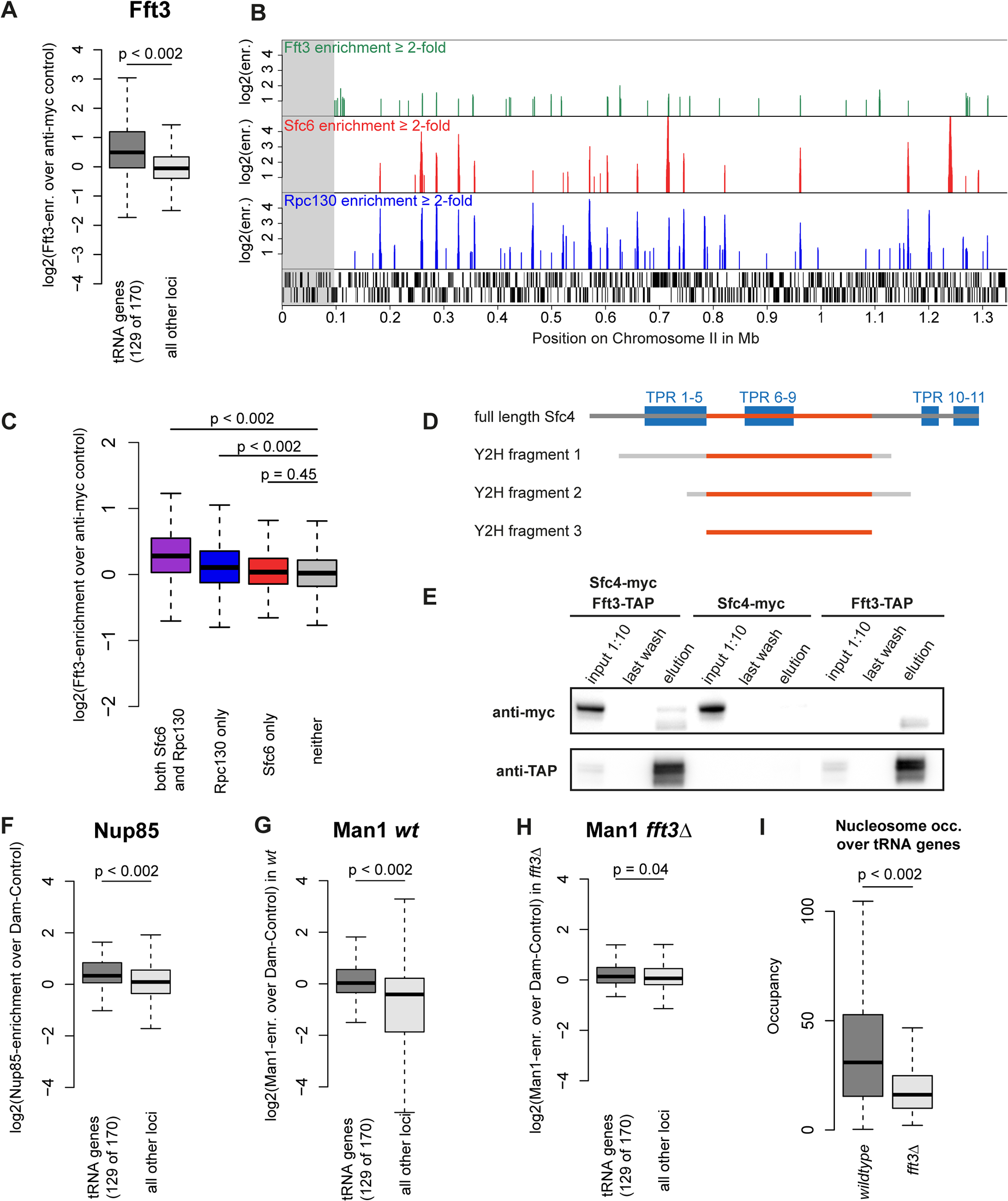 Fft3 interacts with TFIIIC at Pol III transcribed loci and affects peripheral localization of tRNA genes.