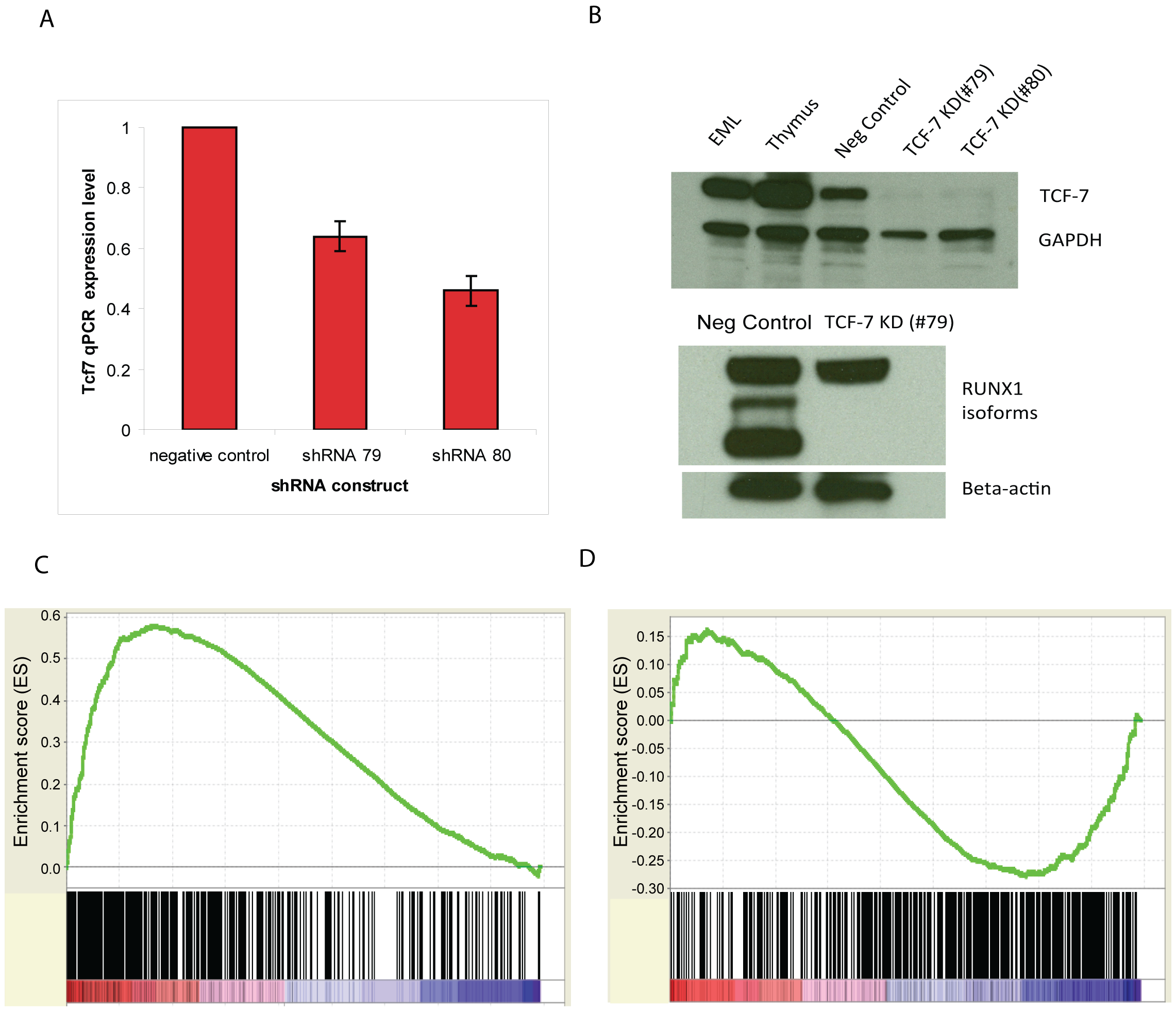<i>Tcf7</i> shRNA gene knockdown experiments provide functional evidence.
