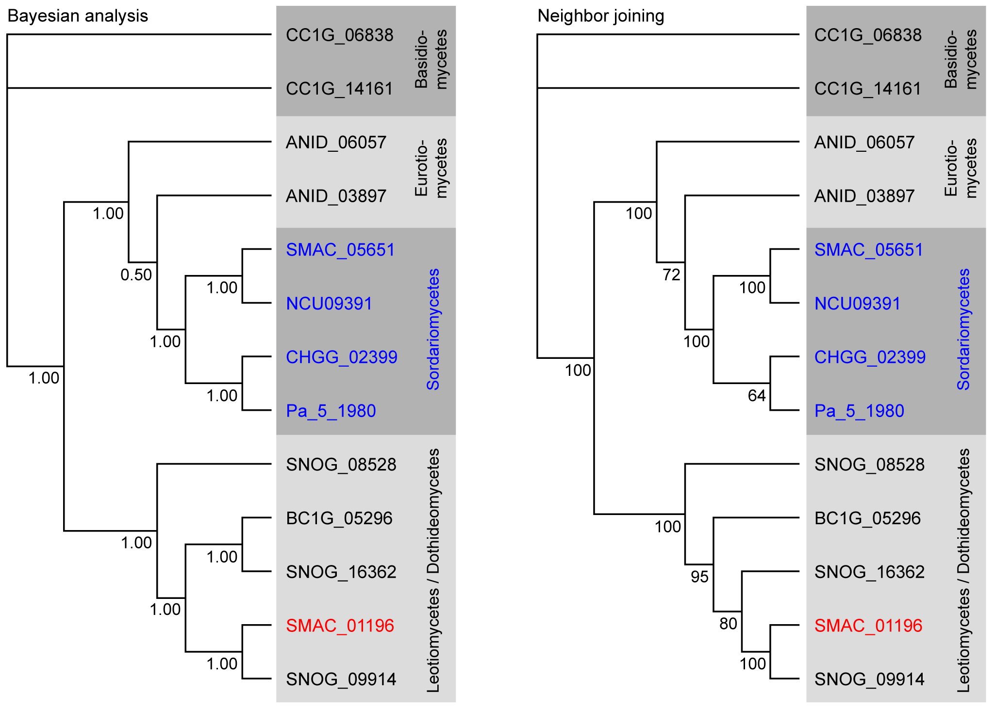 Phylogenetic analysis of the predicted phenylalanine ammonia lyase (PAL) proteins from eight fungi.