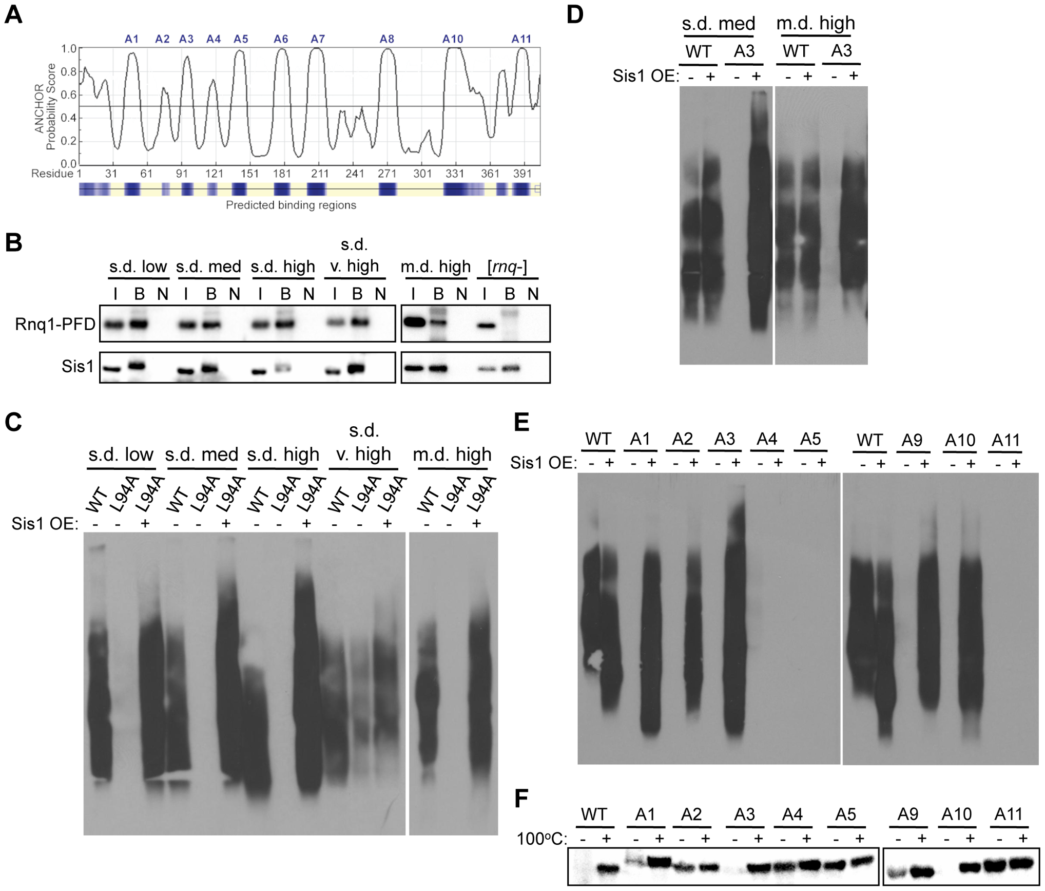 Rnq1 amyloidogenic regions differentially modulate interactions with Sis1.