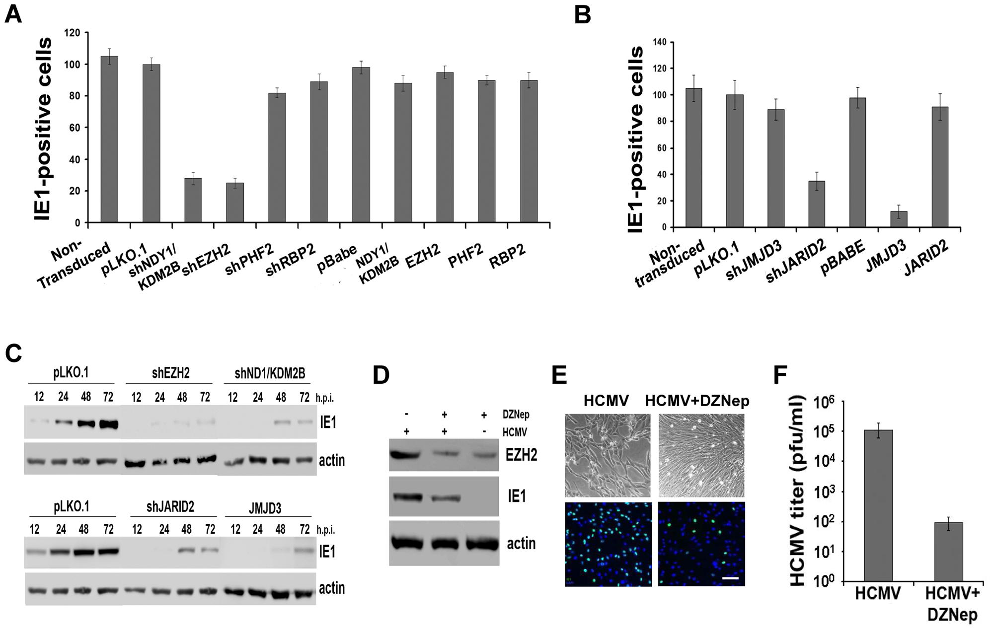 NDY1/KDM2B, EZH2 and H3K27 tri-methylation are required for immediate-early gene transcription.
