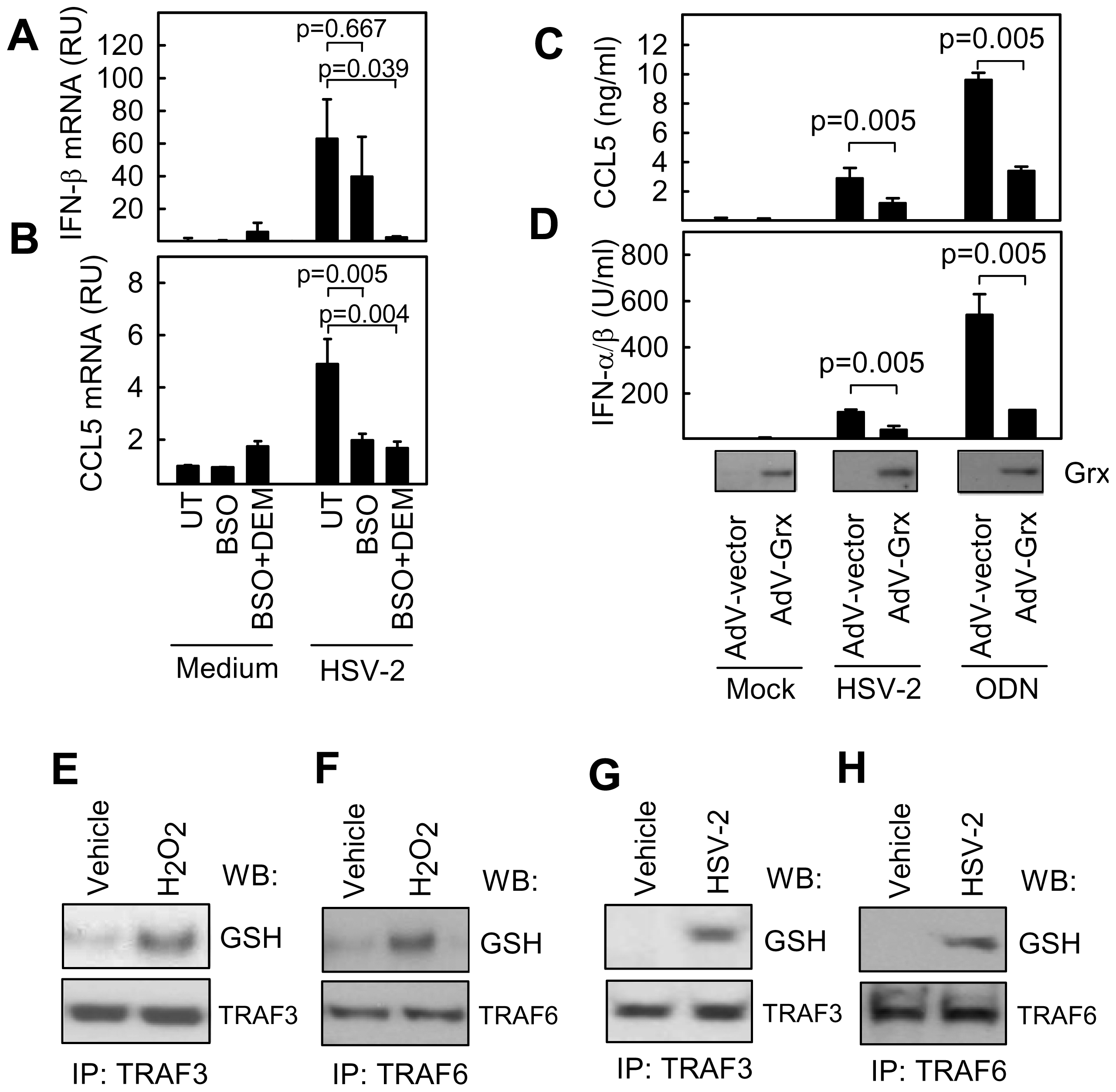S-glutathionylation of TRAFs in response to exogenous and virus-induced ROS.