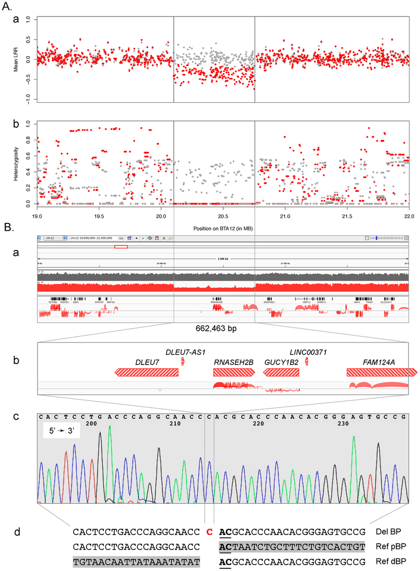 Characterization of the BTA12 deletion.