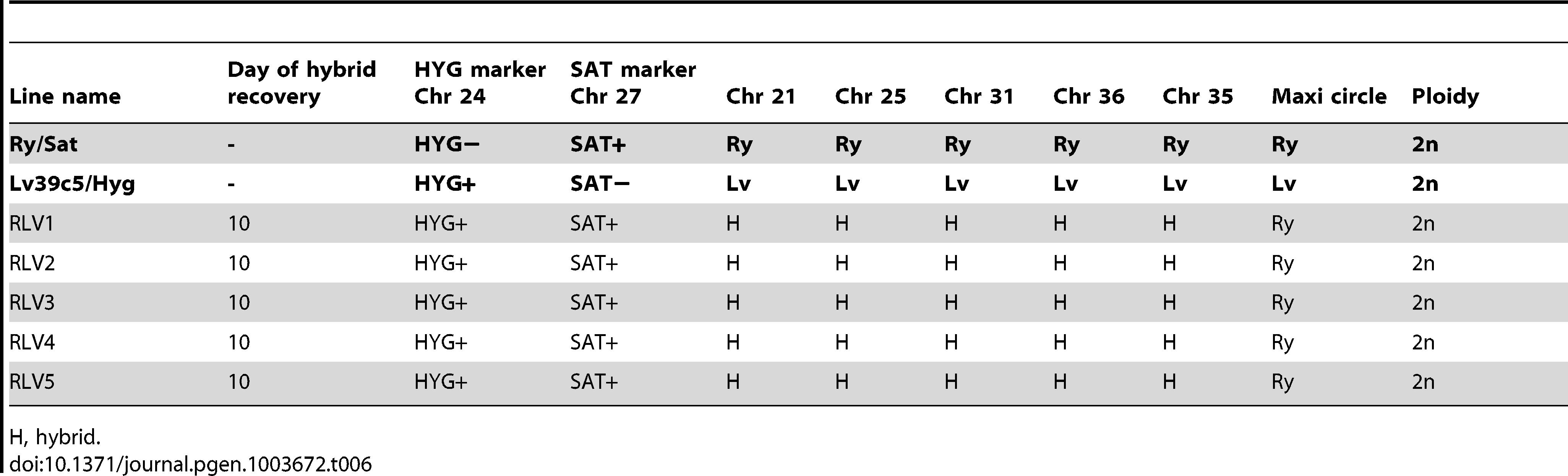 Summary of Ry/Sat×LV39c5/Hyg hybrid genotypes generated in <i>P. duboscqi</i>.