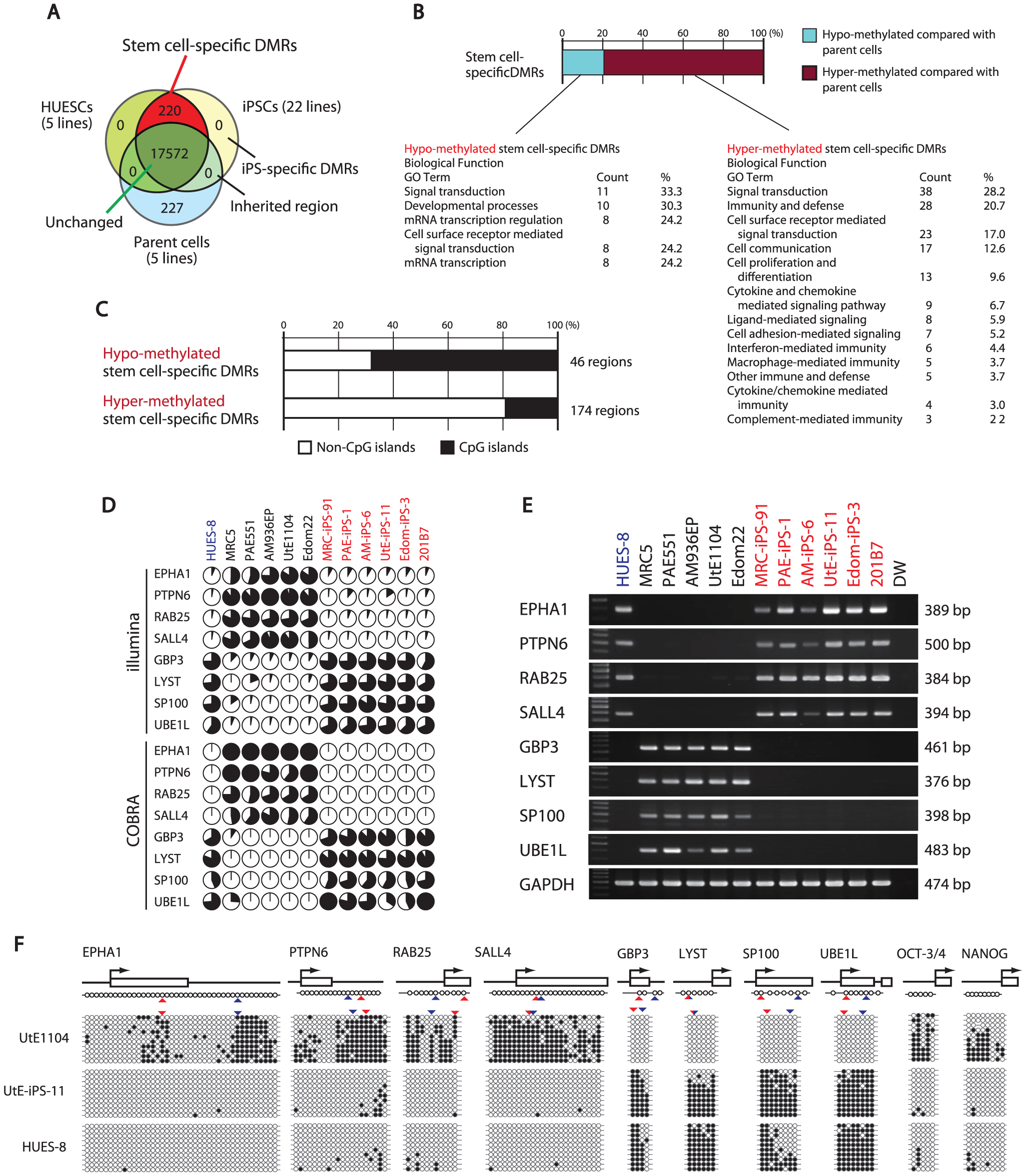 Defining stem cell-specific DMRs as novel epigenetic iPS markers.