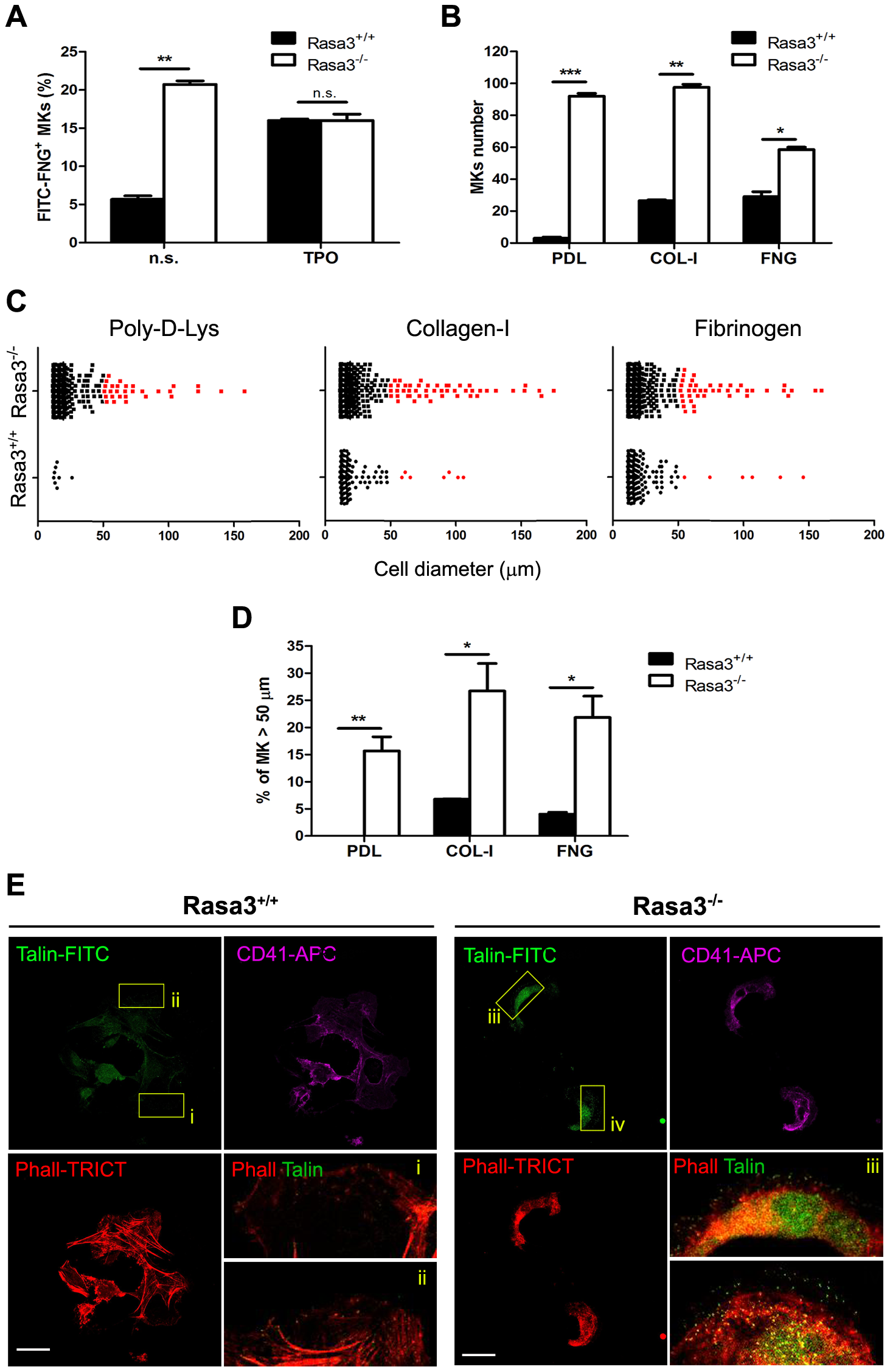 Altered inside-out and outside-in integrin signaling in Rasa3<sup>−/−</sup> megakaryocytes.