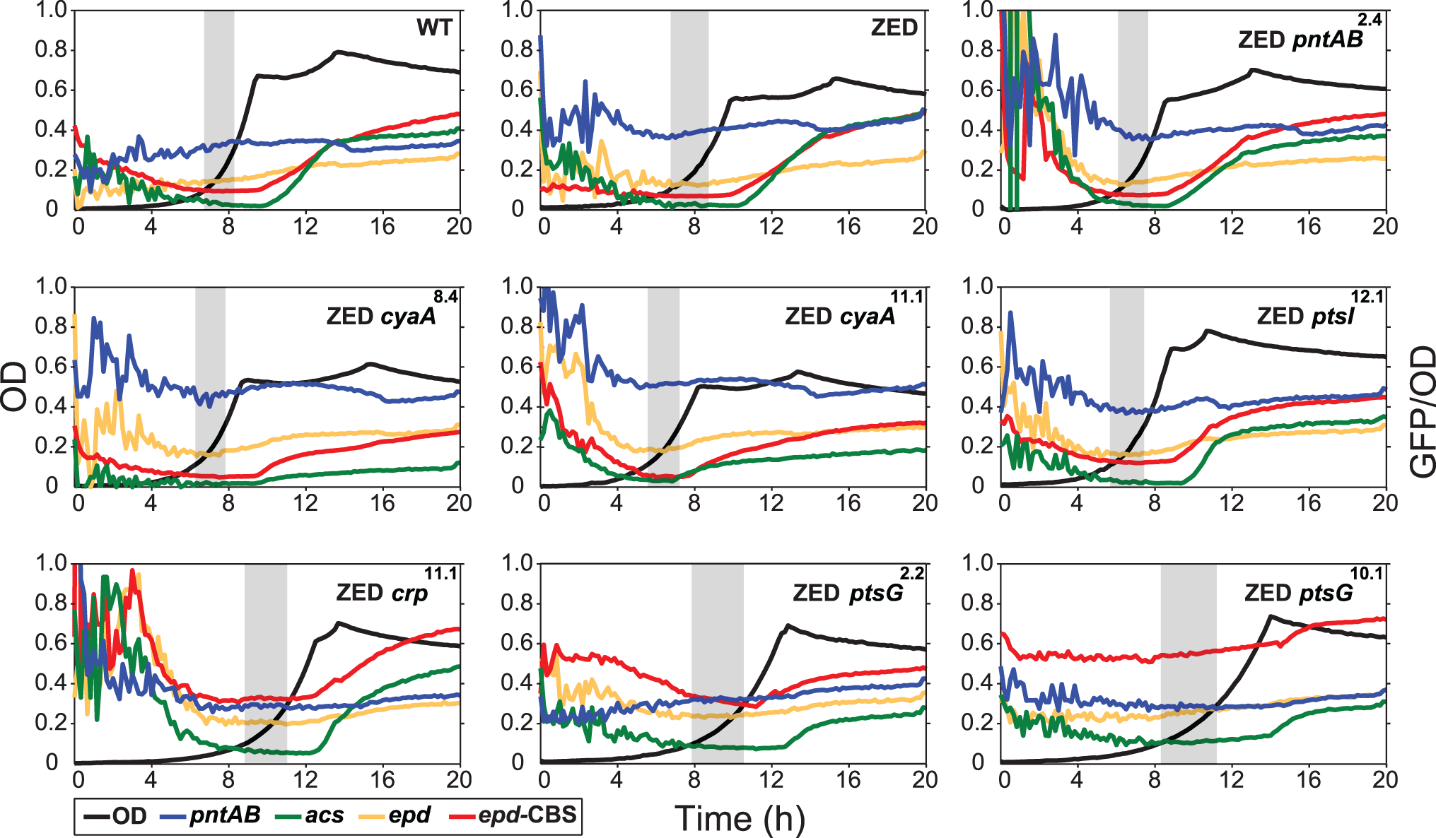Effects of adaptive mutations on growth profiles and transcriptional activity.