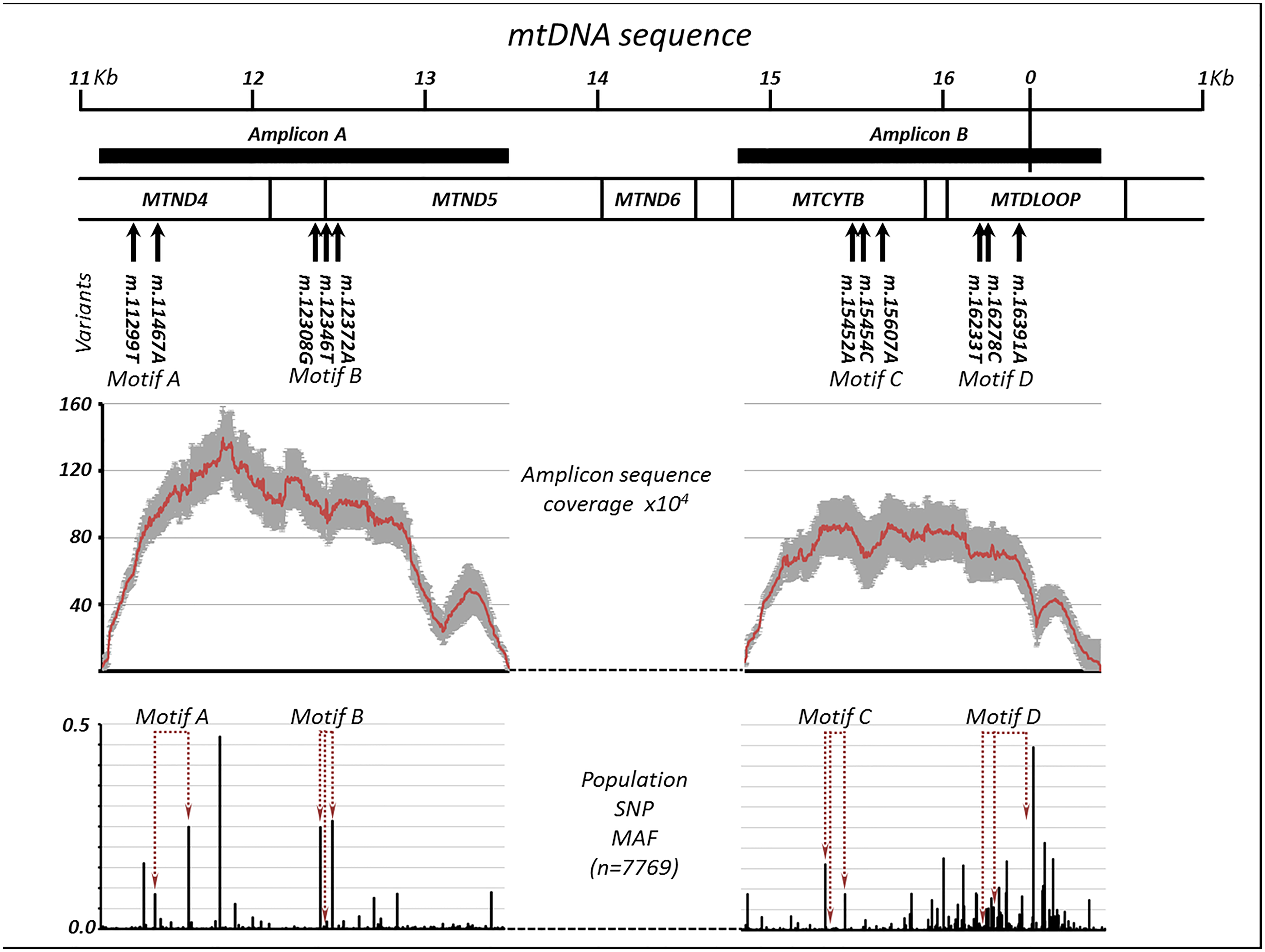 Extreme deep sequencing in trios with discordant paternal and maternal mitochondrial DNA.