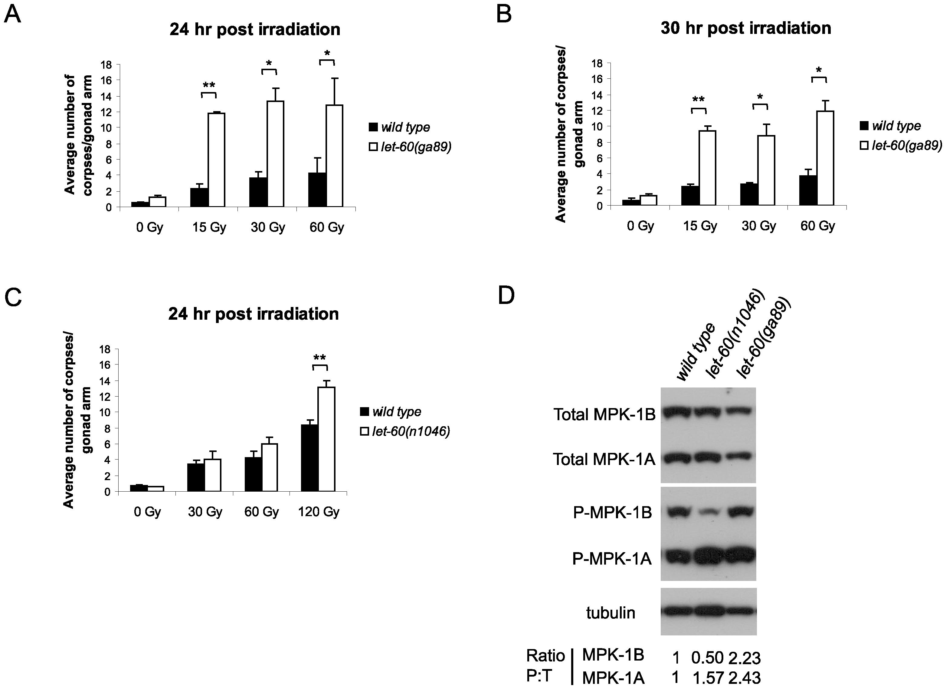 <i>let-60(ga89)</i> mutants show enhanced apoptosis following irradiation.